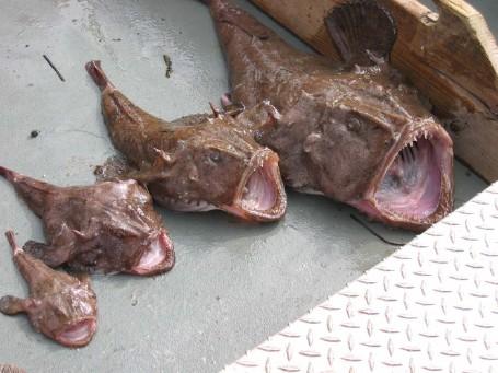 Monkfish photo credit: http://jimberkin.wordpress.com/2008/06/02/hey-hey-were-the-monkfish/