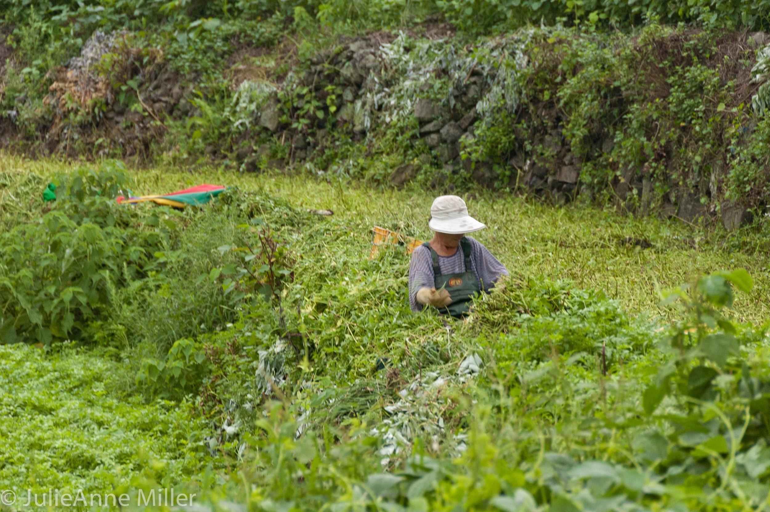 watercress farmer.jpg