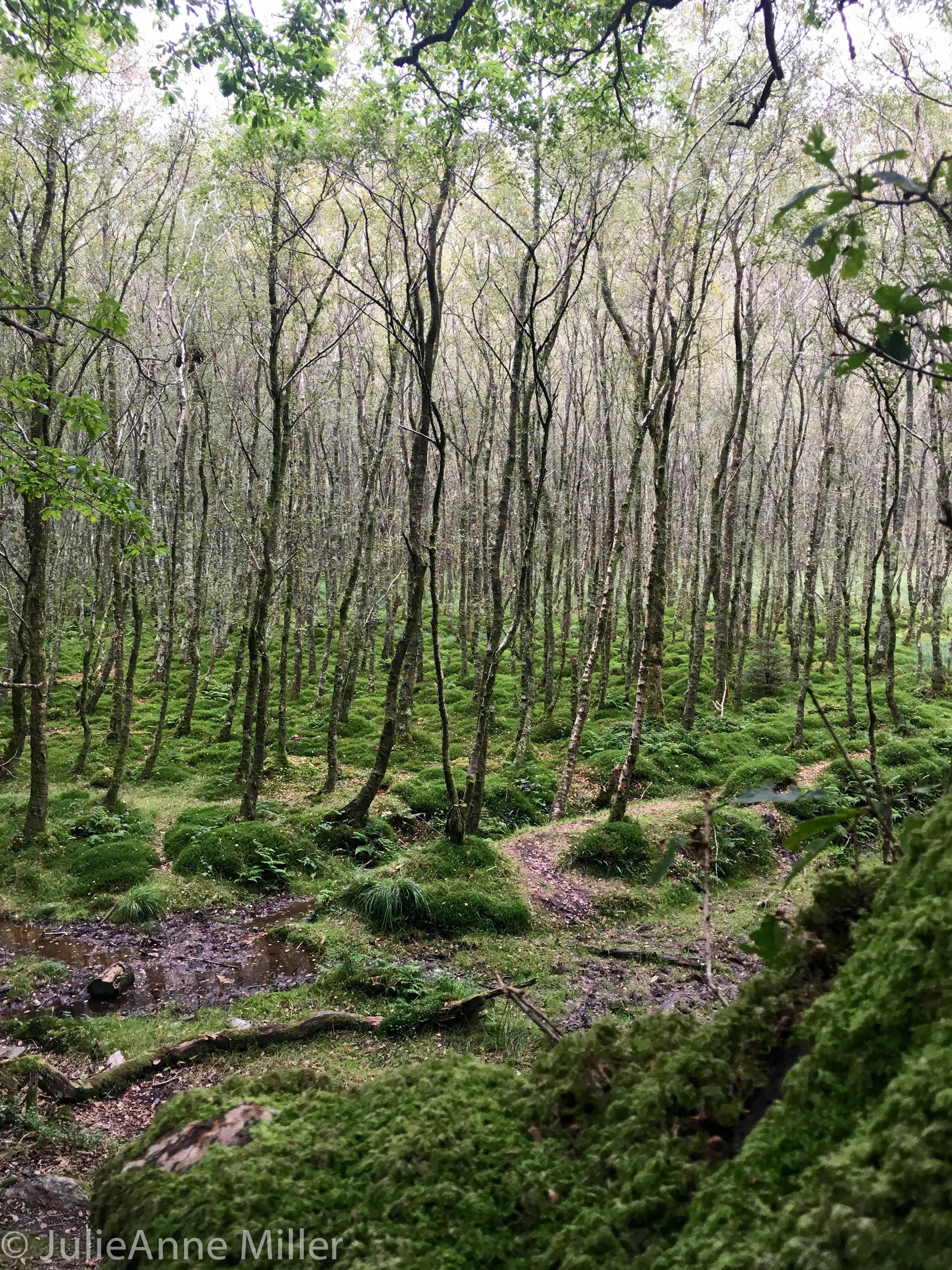 bogs of wicklow.jpg