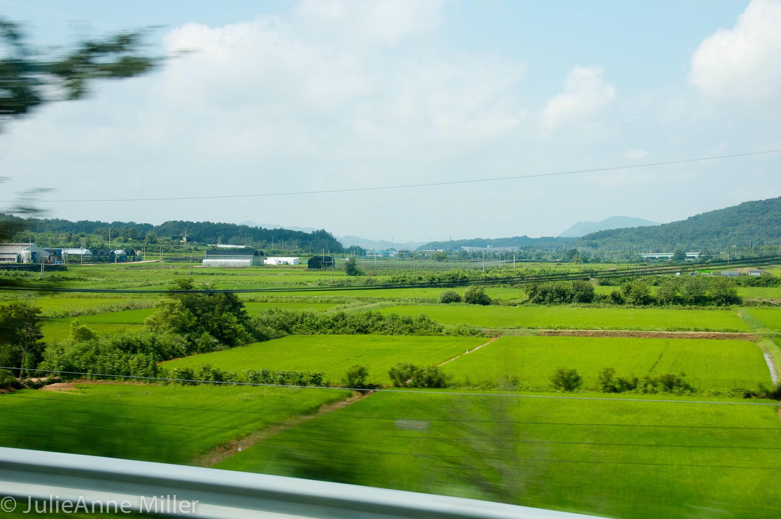 fields near DMZ