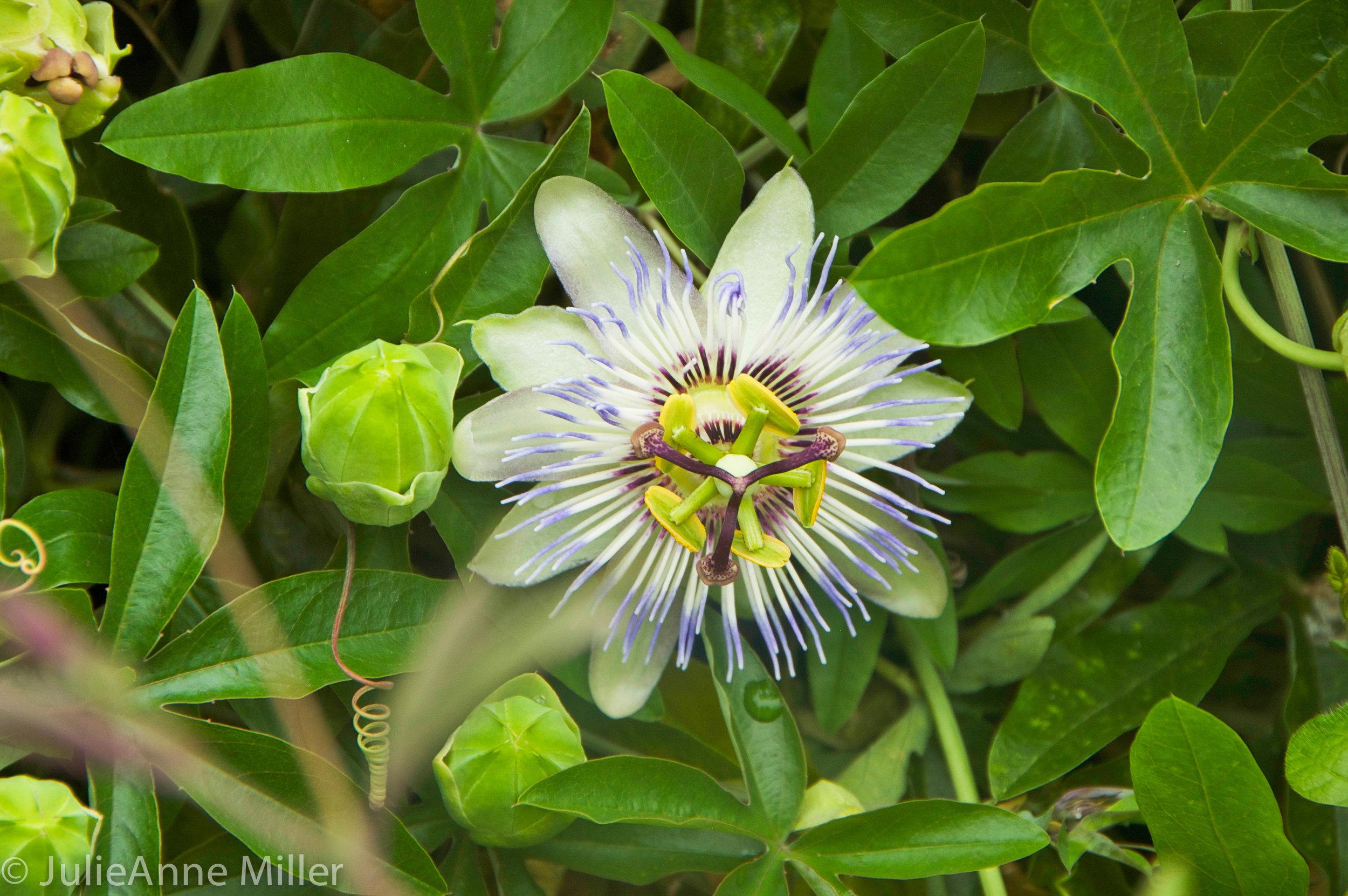 flowers, Namhae