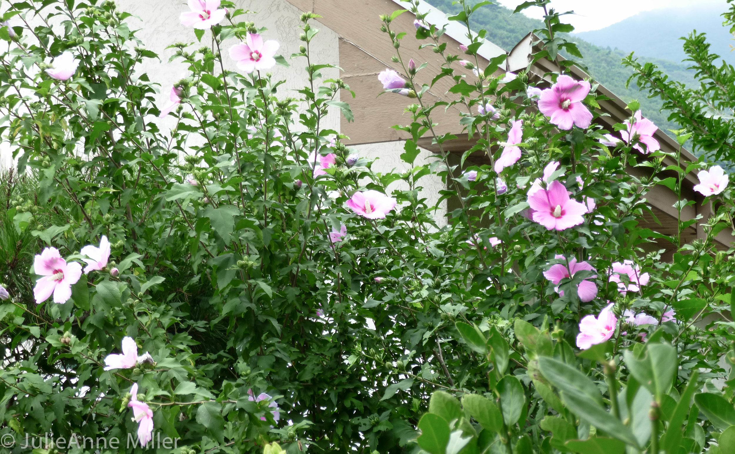 gardens, southern Korea