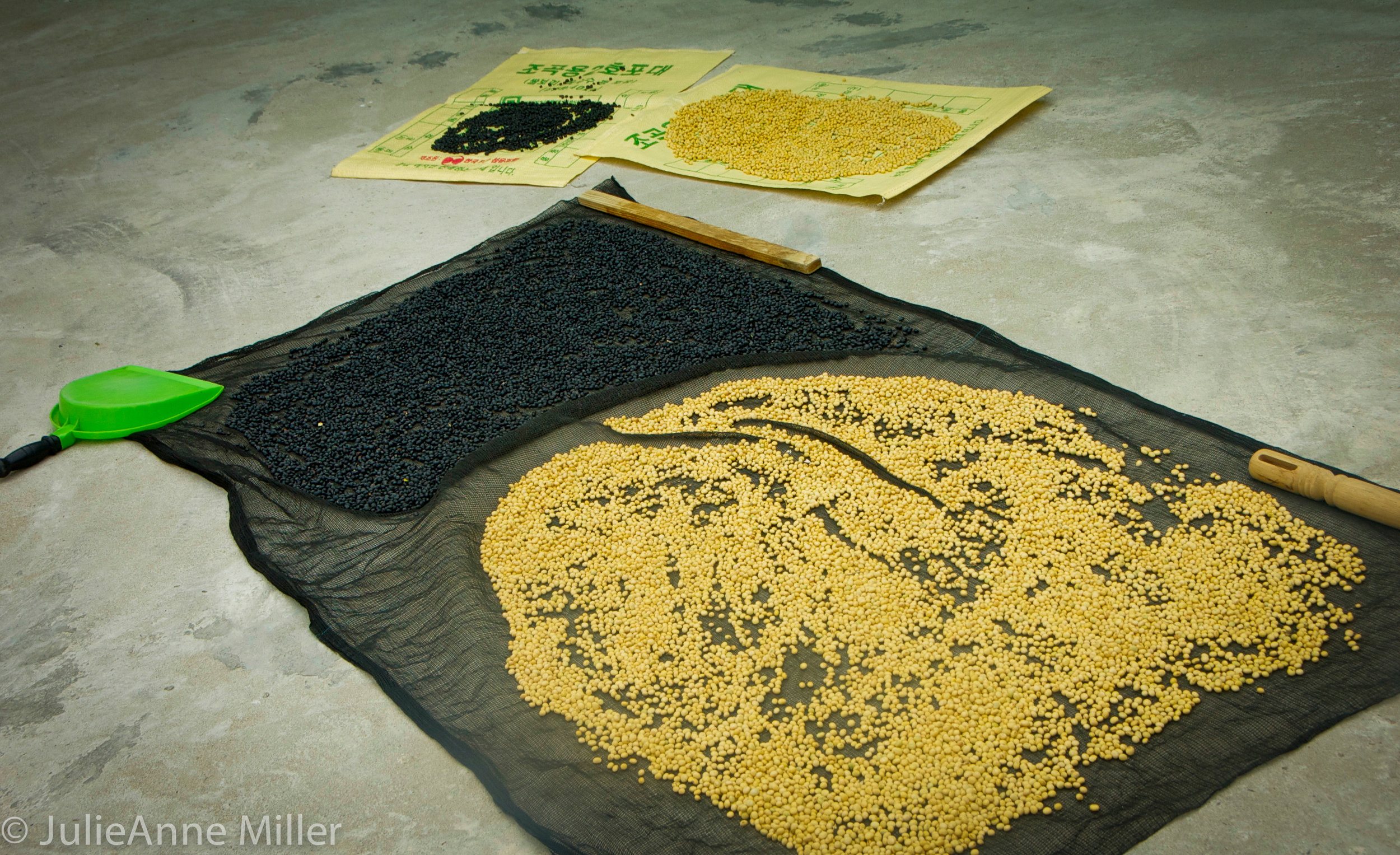 drying beans in Gacheon, Korea