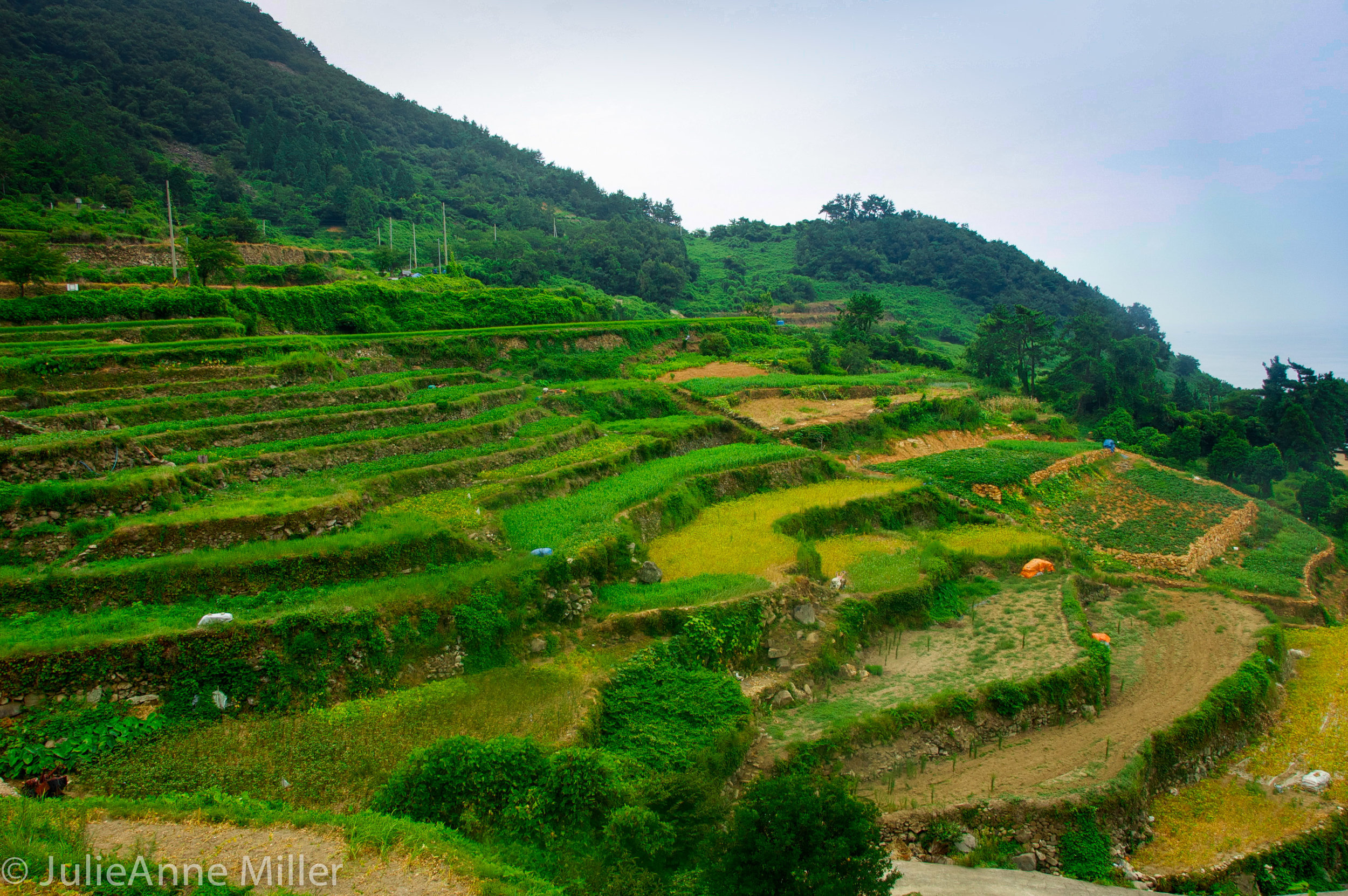 rice fields, Gacheon Village