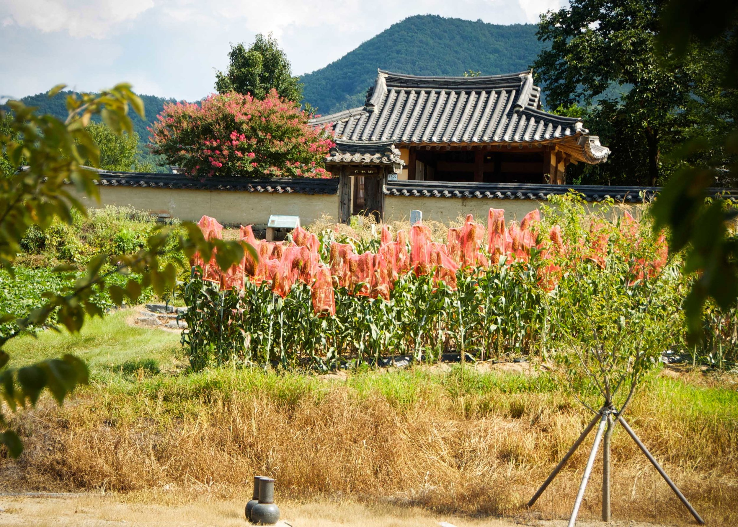 Hahoe Village, a UNESCO site, South Korea