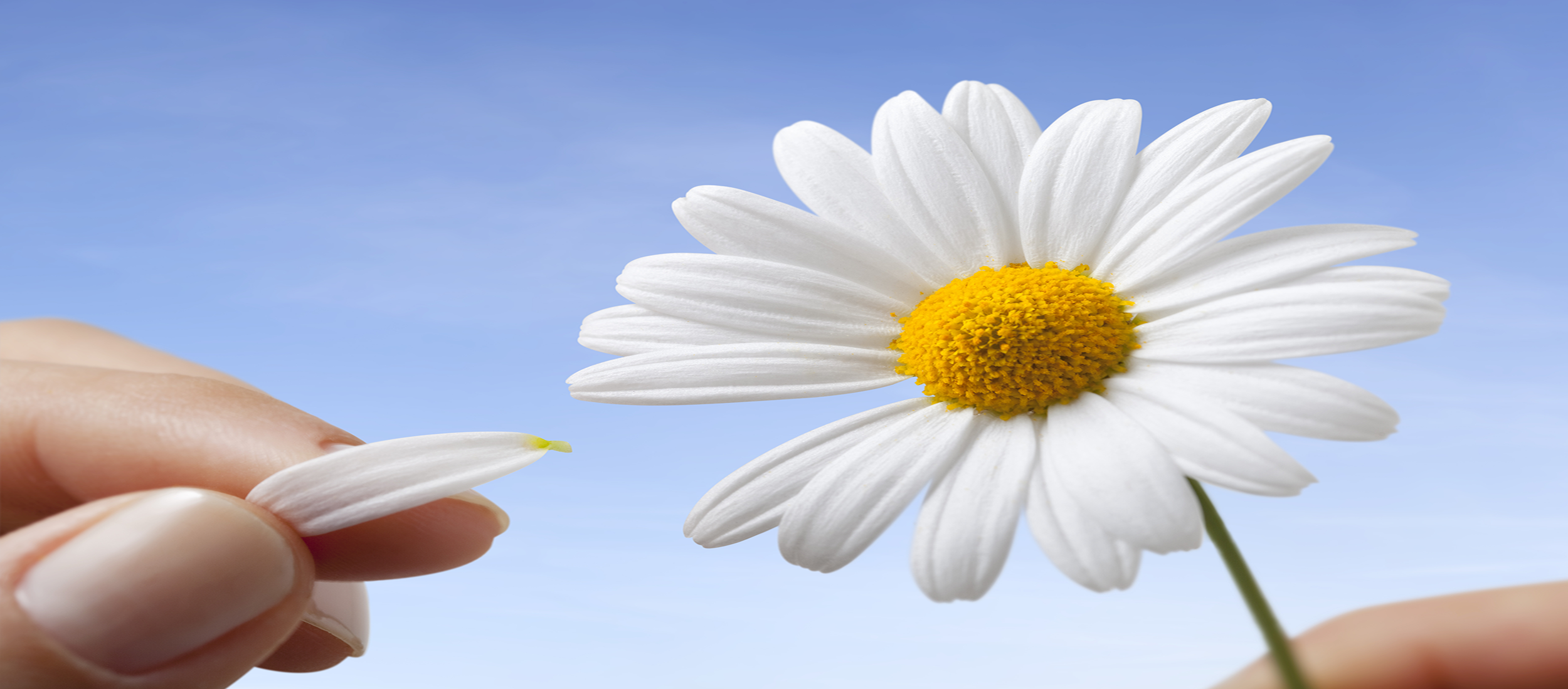 HeLovesMeDaisy_header.png