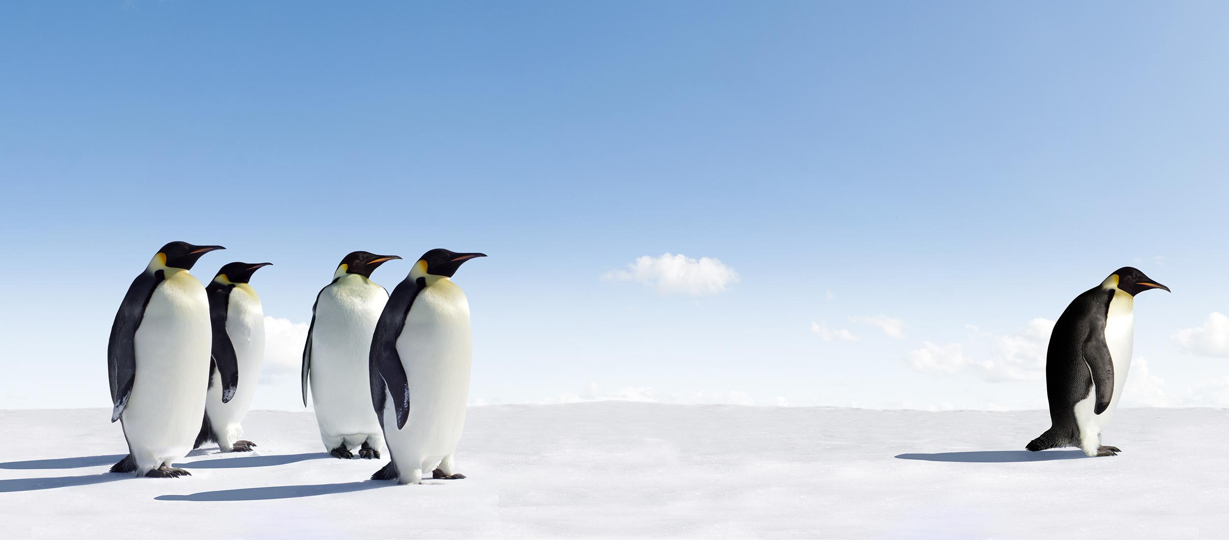 penguins_header.png