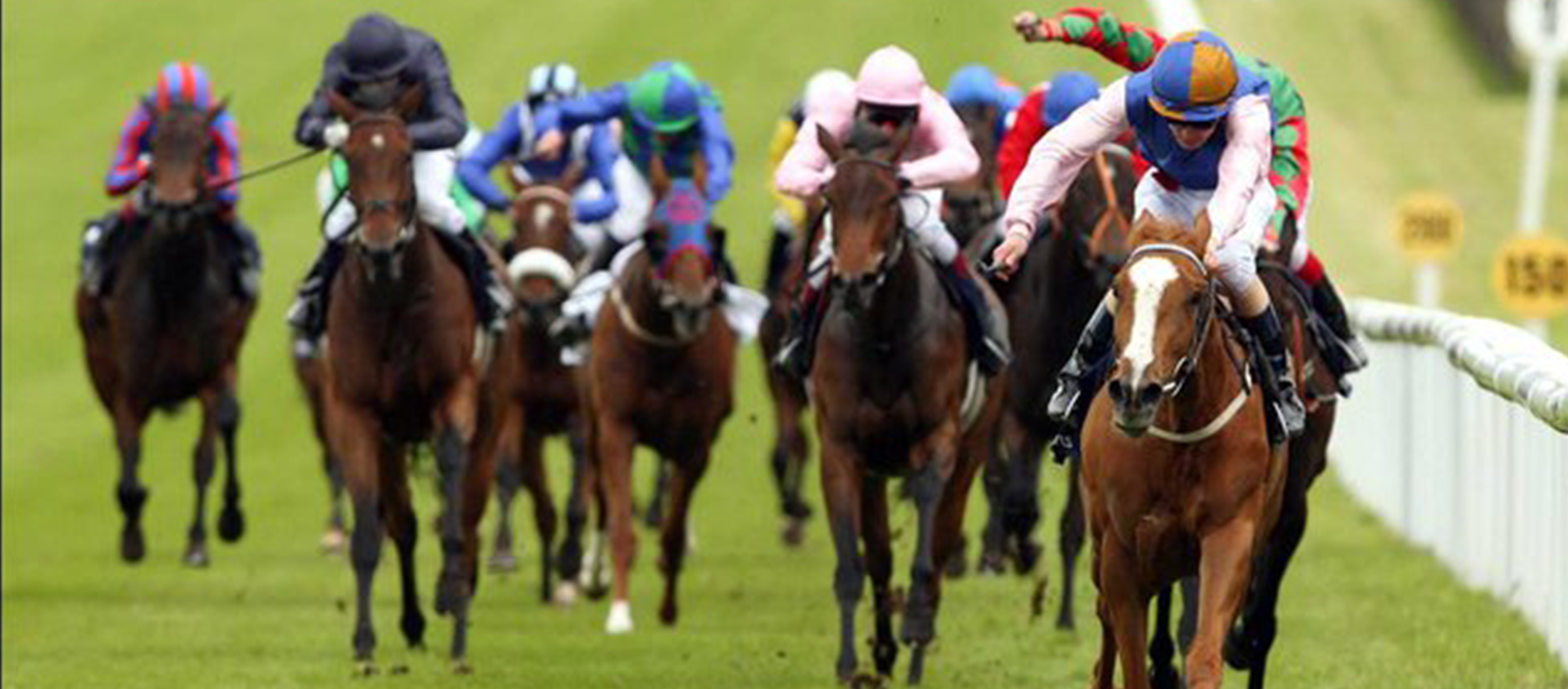 Horse Race Blog Header.png