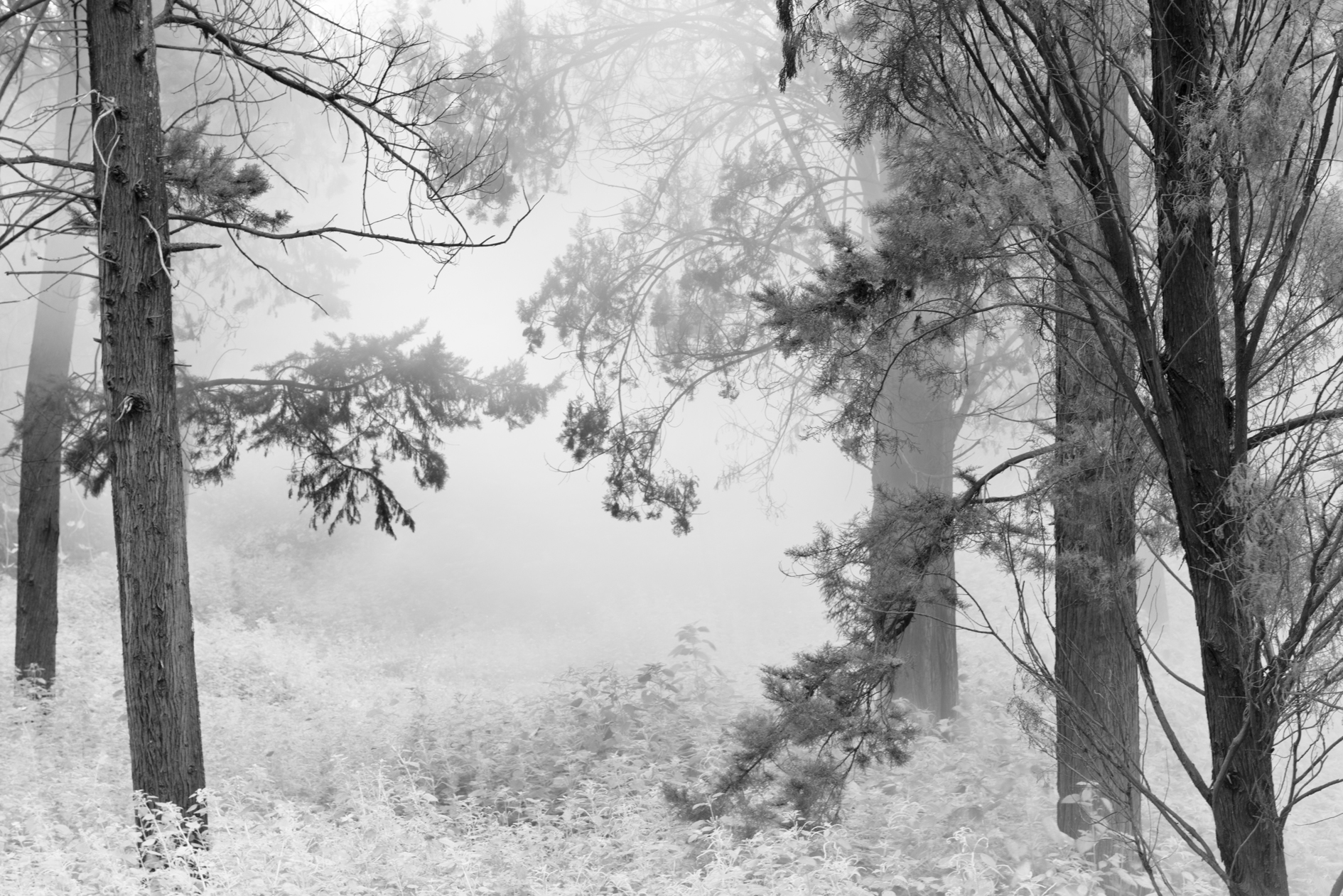 SAN_5585_infrared.jpg