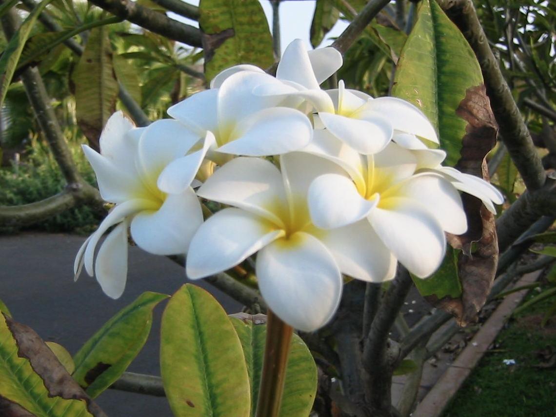 Reiki helps us to bloom!