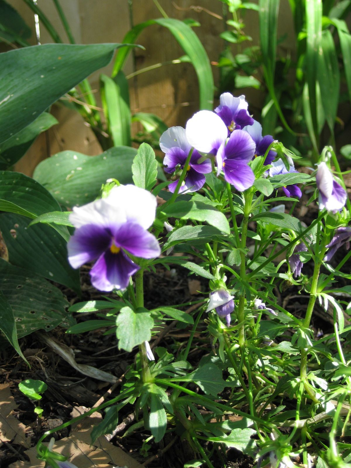 Flowers in Our Garden.jpg