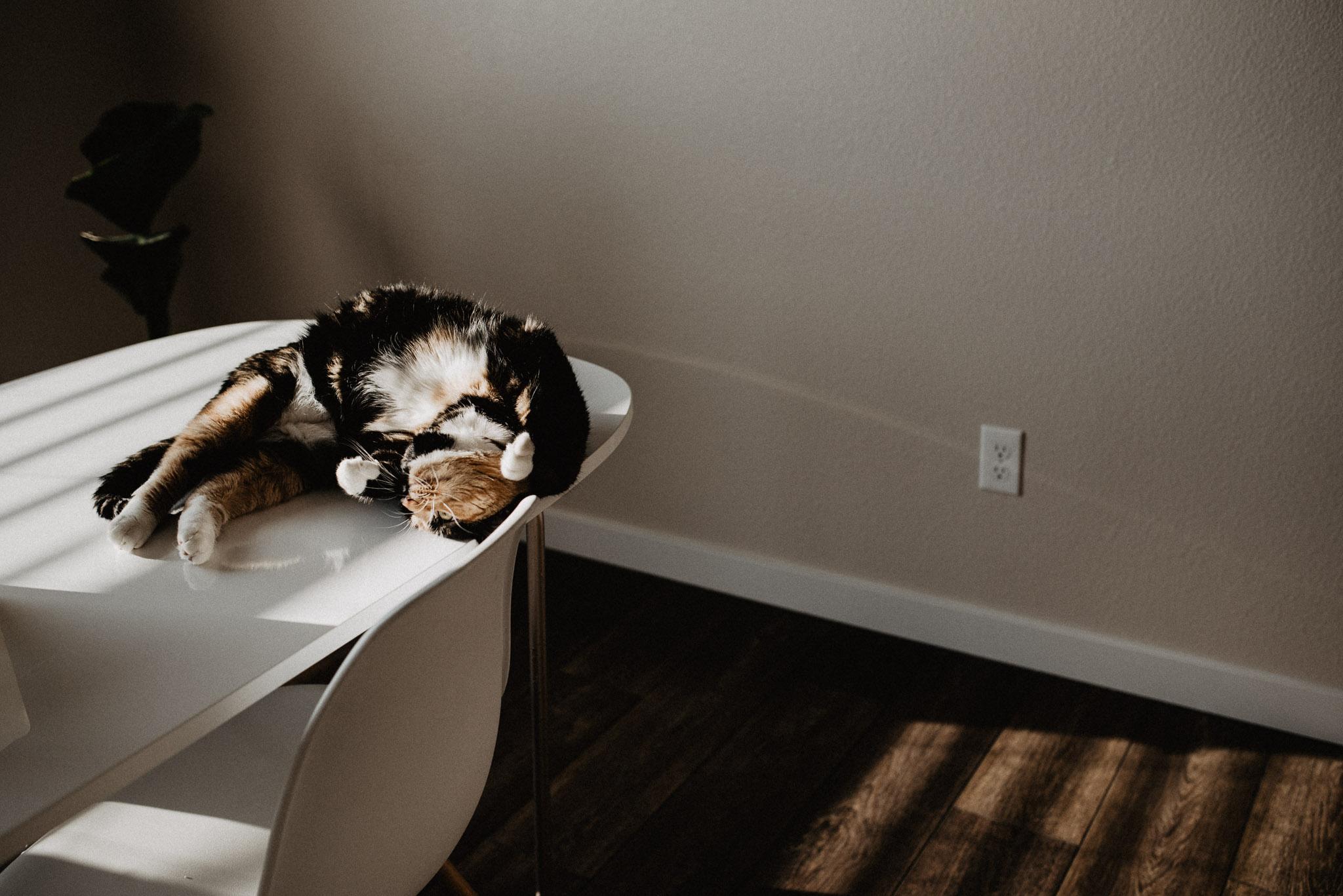 Boise Boudoir Photographer Boise Senior Photographer Makayla Madden Photography Mid Century Modern Kitchen Table Chairs Decor Kitty