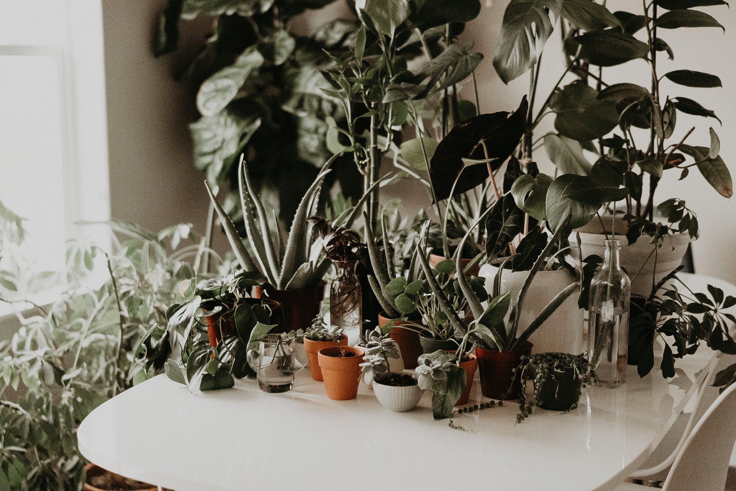 Boise Senior Photographer Makayla Madden Photography Plant Lover Plant Care Tips Tricks Advice 5-1-1 Mix Best Plant Soil Succulents Aloe Fiddle Leaf Fig Care Idaho Boudoir Photographer Crazy Plant Lady