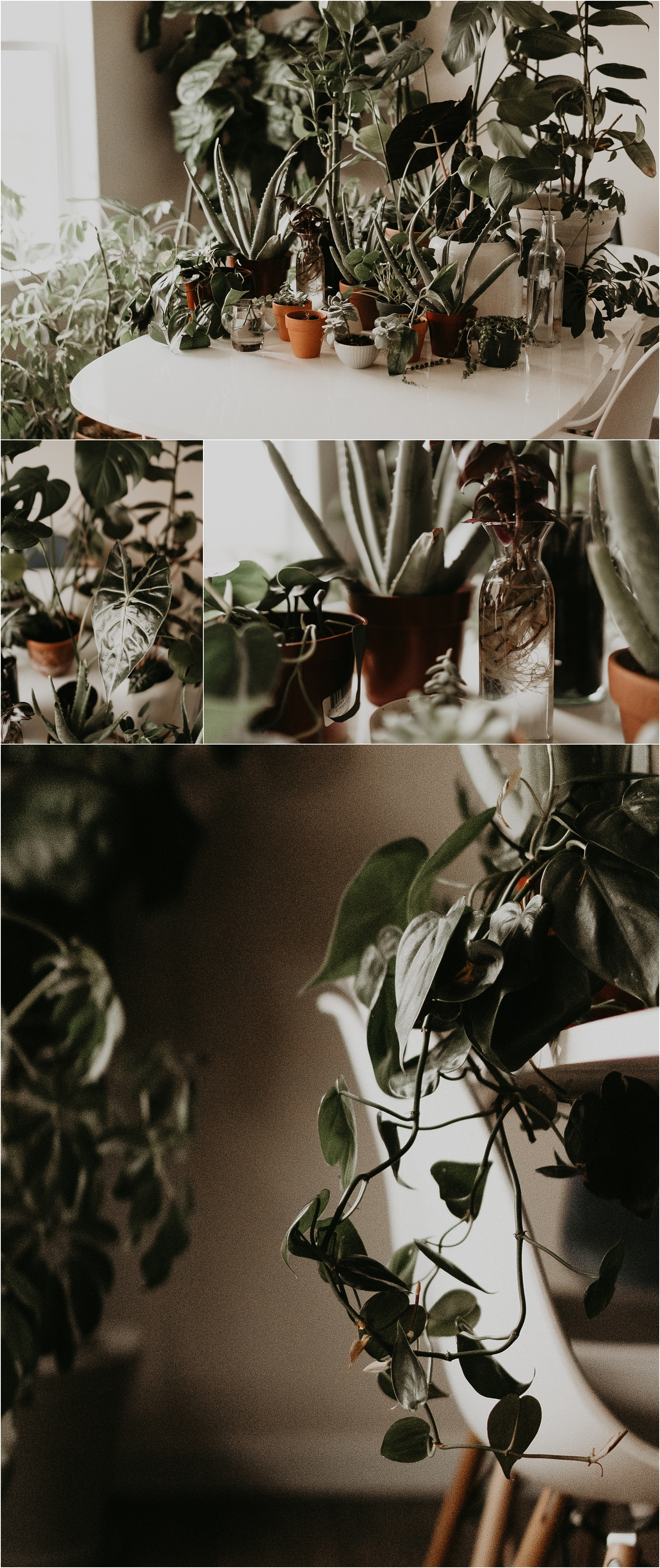 Boise Senior Photographer Boise Boudoir Photographer Makayla Madden Plant Lady Indoor House Plant Care Advice Tips Pothos Fiddle Leaf Plant Care 5-1-1 Potting Mix