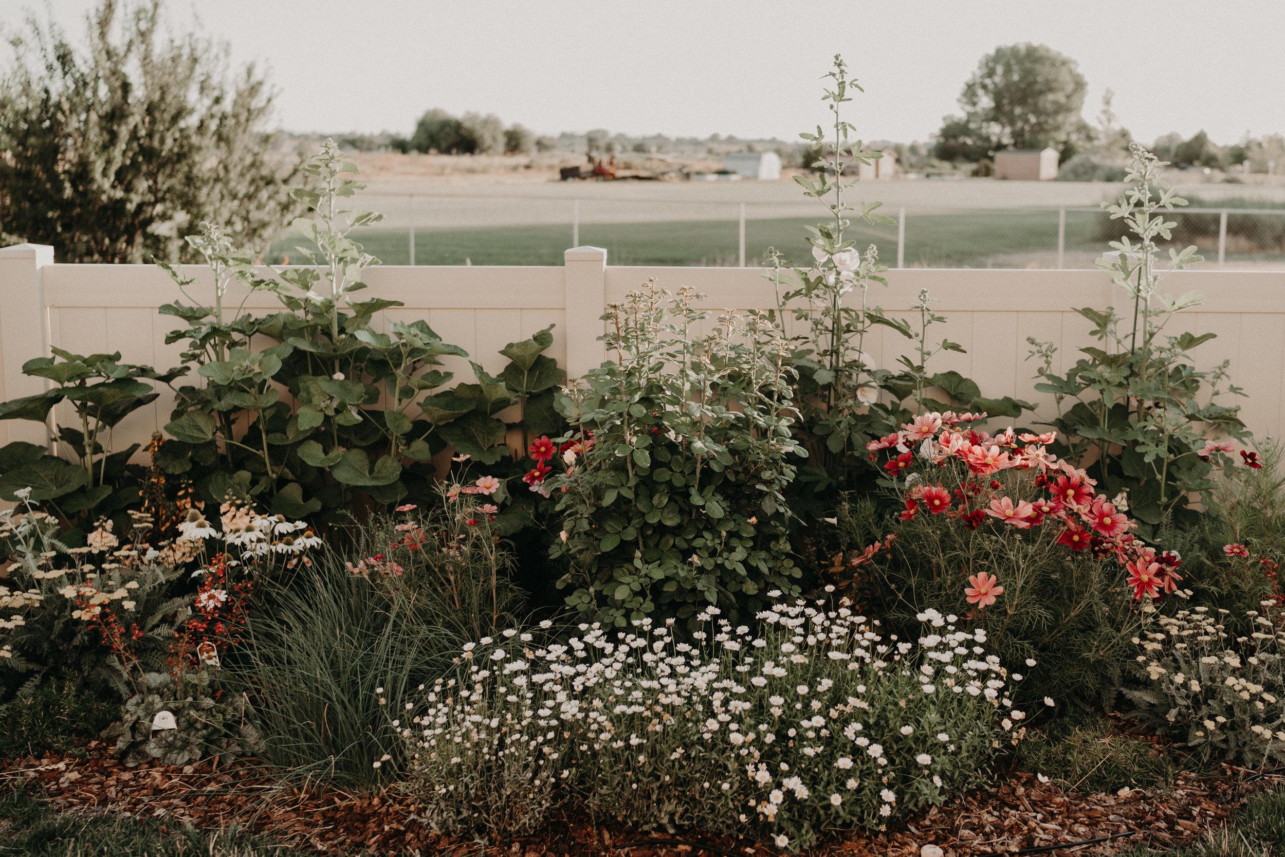 Boise senior photographer Makayla Madden Garden English Cottage Garden Design Ideas Summer Border Pink Yellow Roses Yarrow Rubinato Cosmos Hollyhocks Idaho landscaping green thumb gardening 101