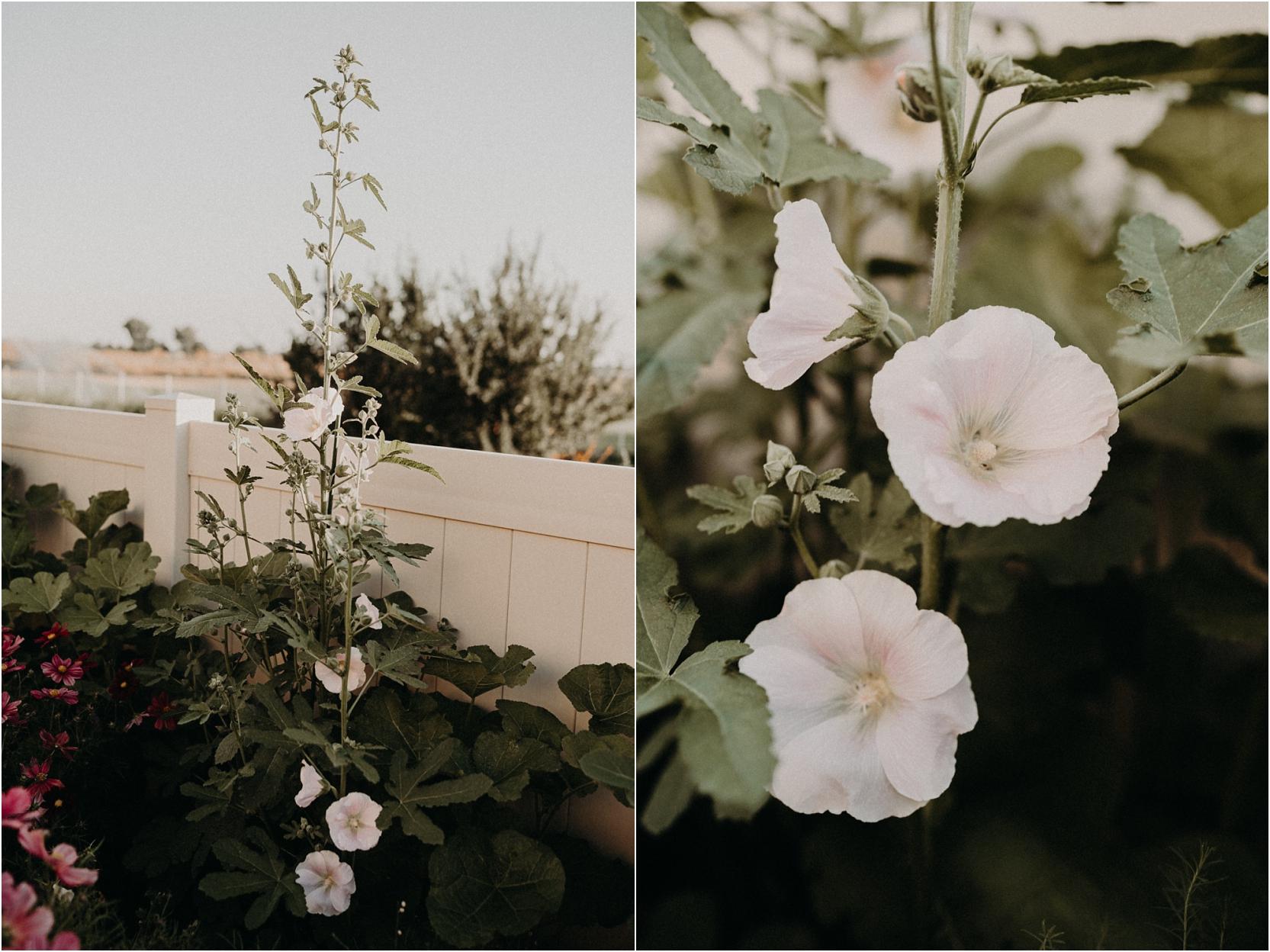 Hollyhocks Indian Springs Mix Cottage Garden Ideas flowers Boise photographer Makayla Madden Idaho Boise Landscaping Gardening ideas design