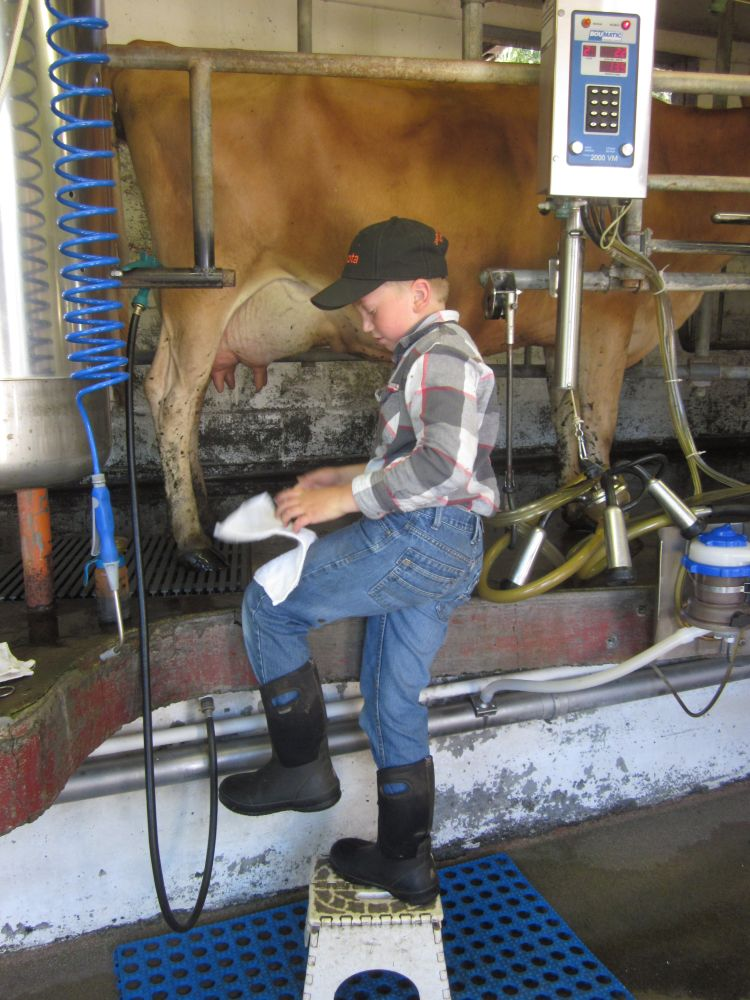 Worth Johnston, age 10, helps with afternoon milking at the Johnston family dairy south of Tillamook.  Photo by Joe Wrabek