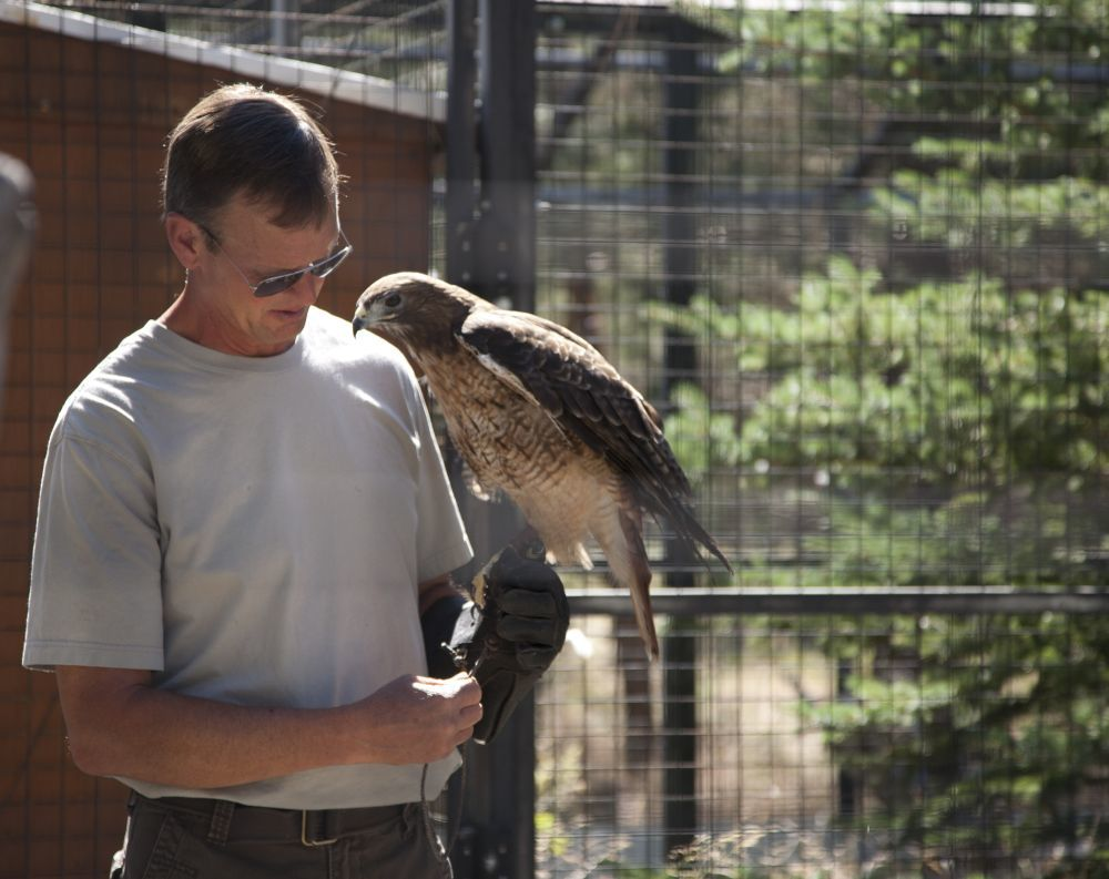 Gary Landers of Wild Wings Raptor Rehabilitation in Sisters brings a red-tailed Hawk, Mercy, out for a check-up. Mercy cannot be released into the wild, but serves as a foster parent for other redtails that arrive for rehab.  Photo by Lynn Woodward