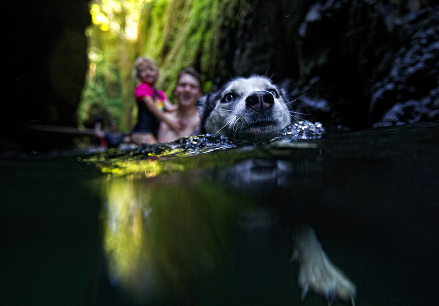 Chuck Stephens and his daughter Evelyn, 3, of Portland, are pulled through the water in Oneonta Gorge by their husky dog named Monroe.  Photo by Thomas Boyd