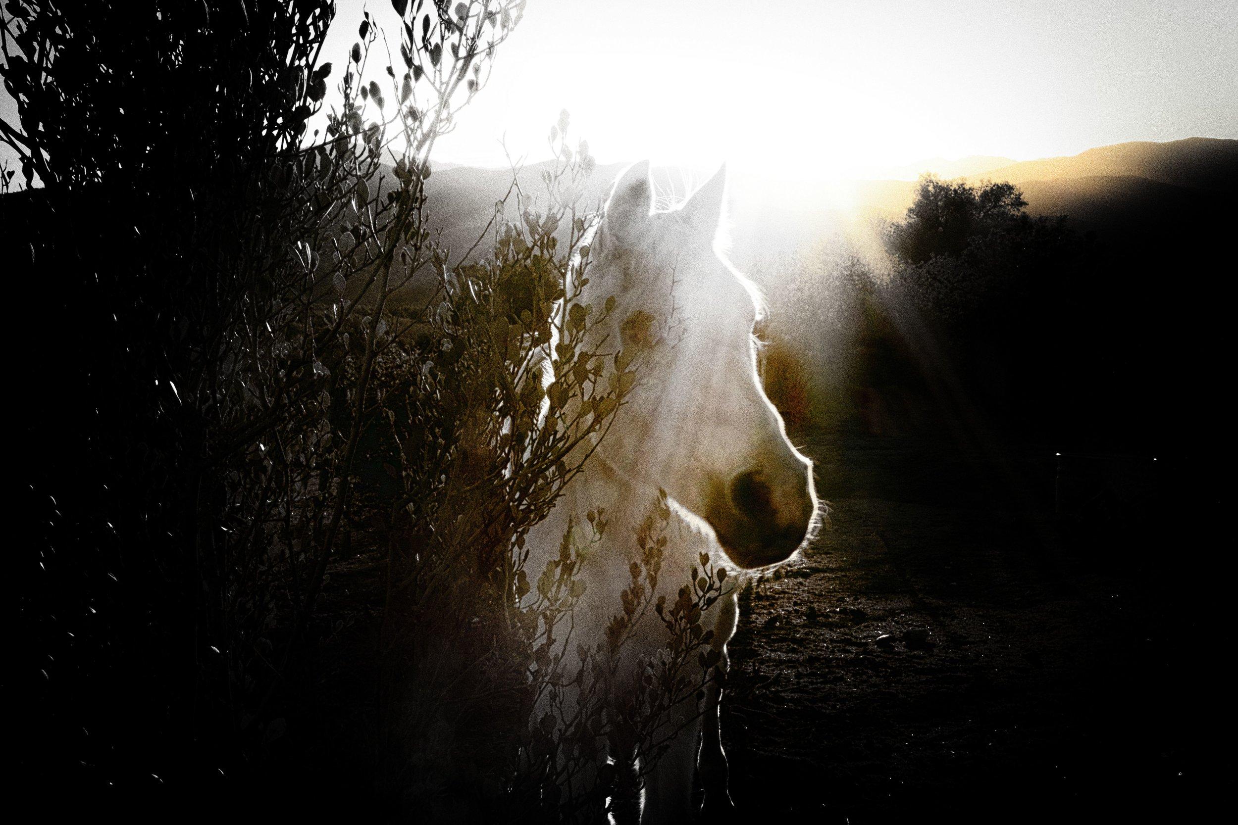 Silver, namesake and director of Silver Horse Retreat