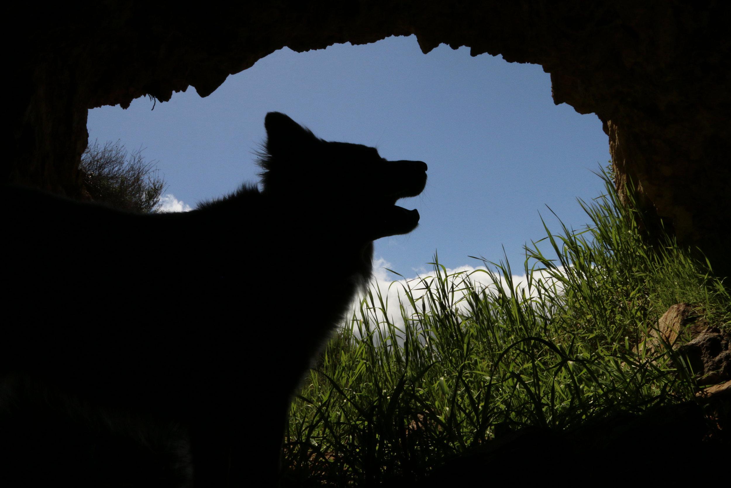 cave wolf.jpg