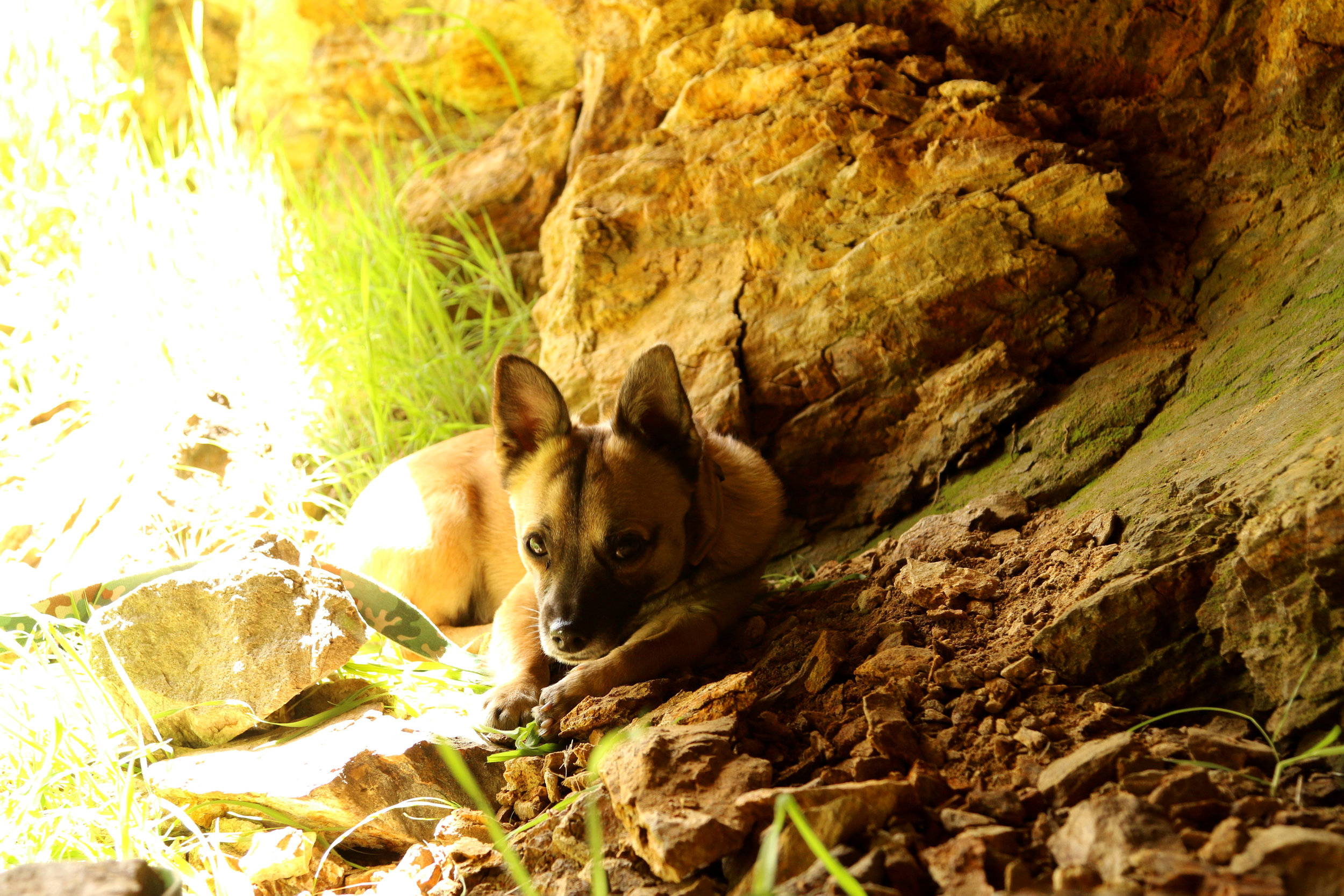 cave bear.jpg