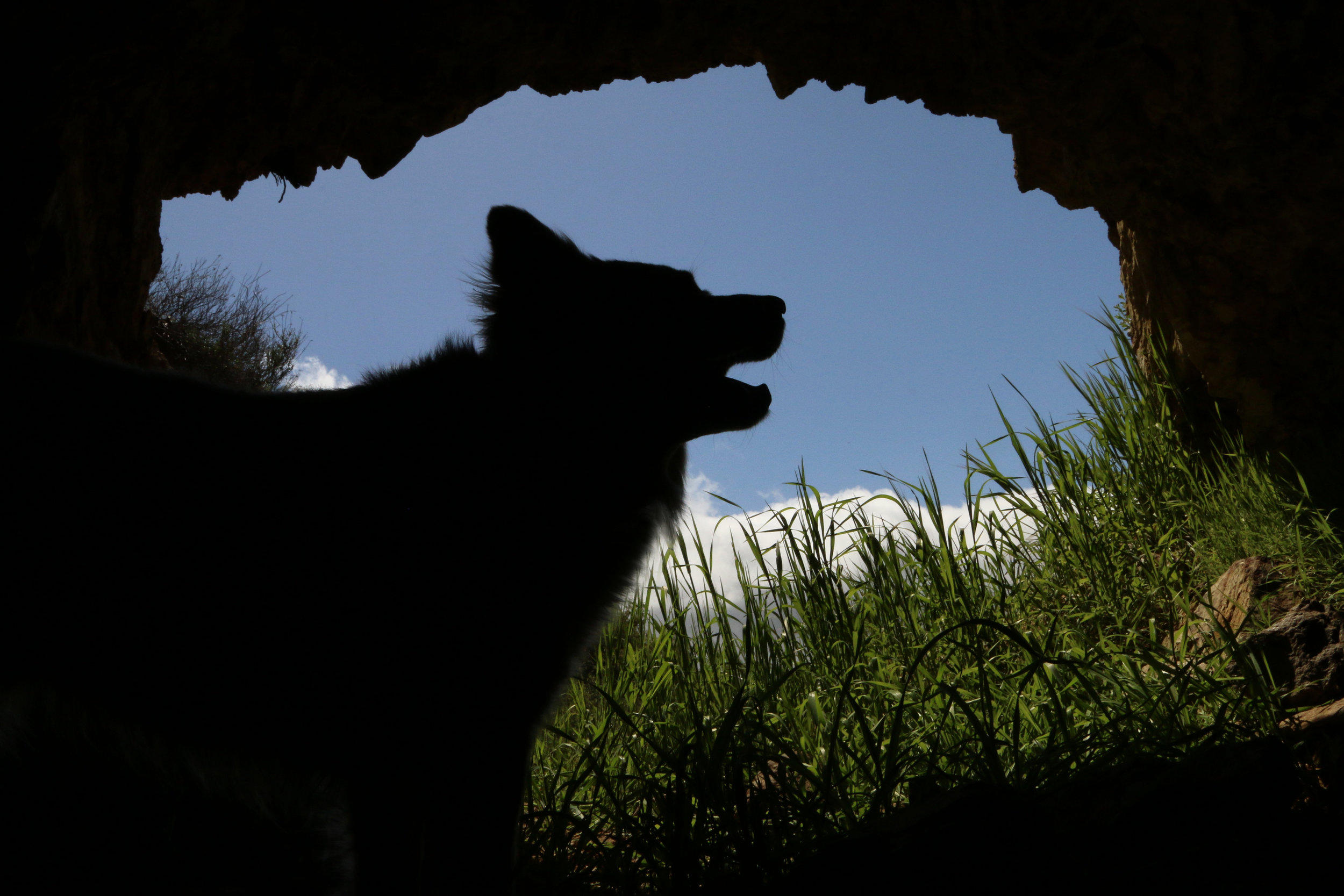 Our dog Fox inside one of the abandoned mines.