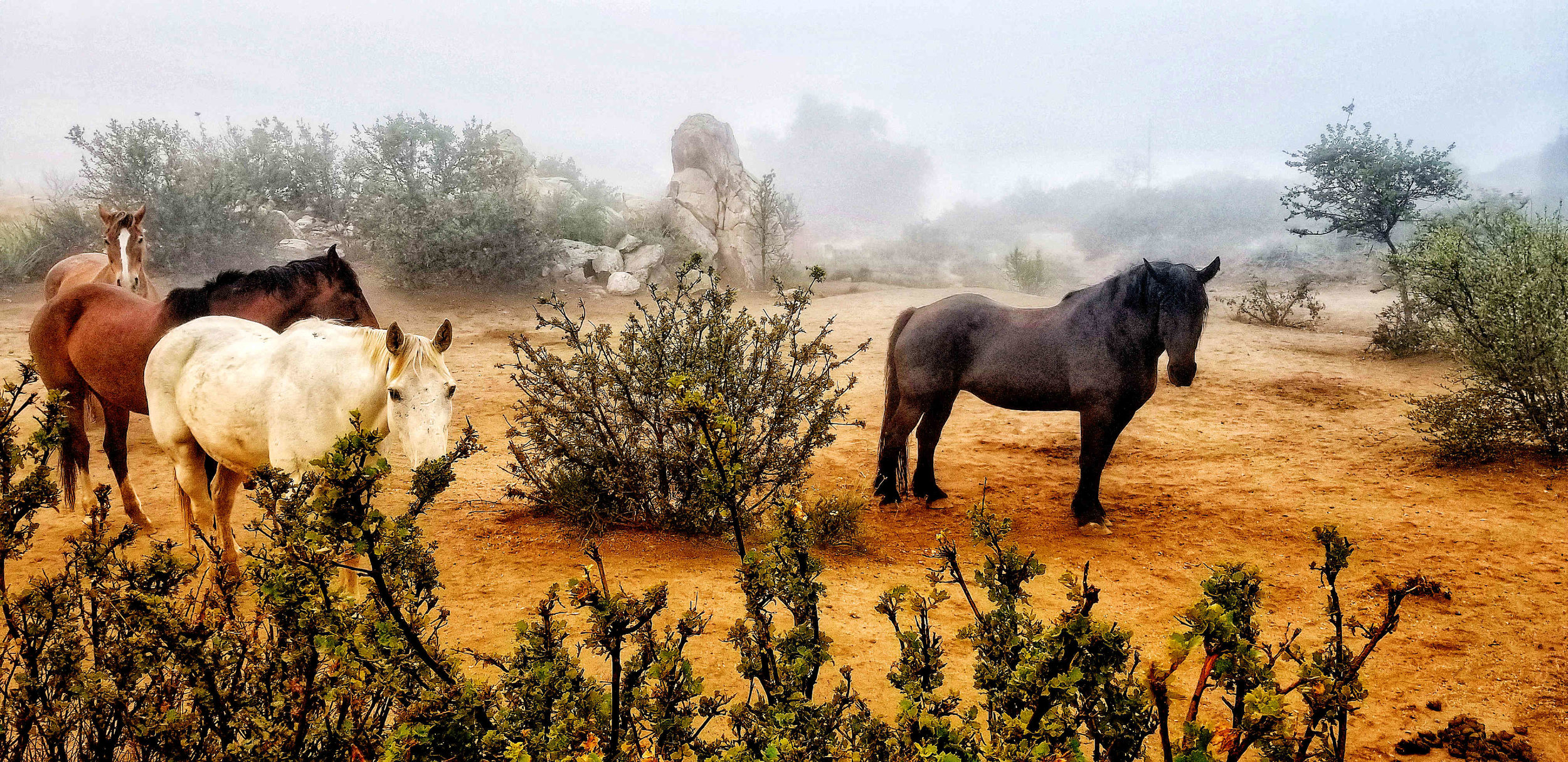horses mist bright lo res.jpg