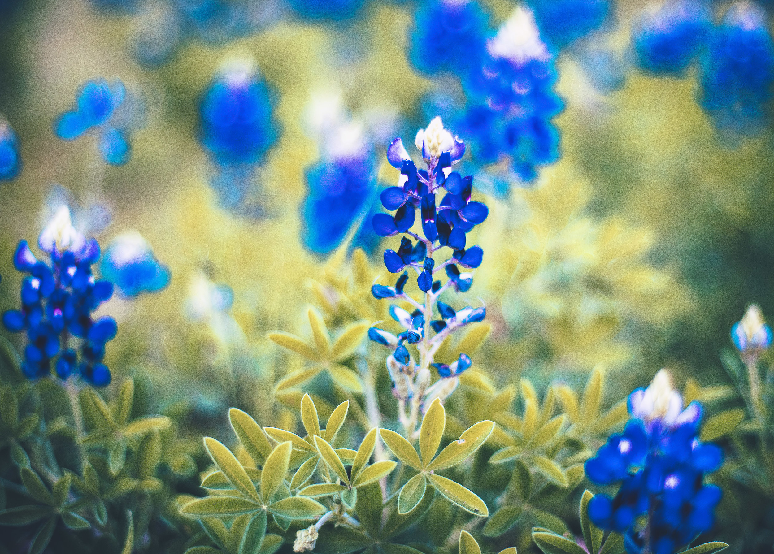 Lady Bird Johnson encouraged the planting of native plants along Texas highways after she left the White House.
