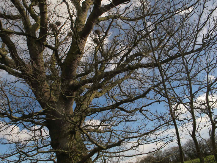 Beautiful craggy trees against the blue sky
