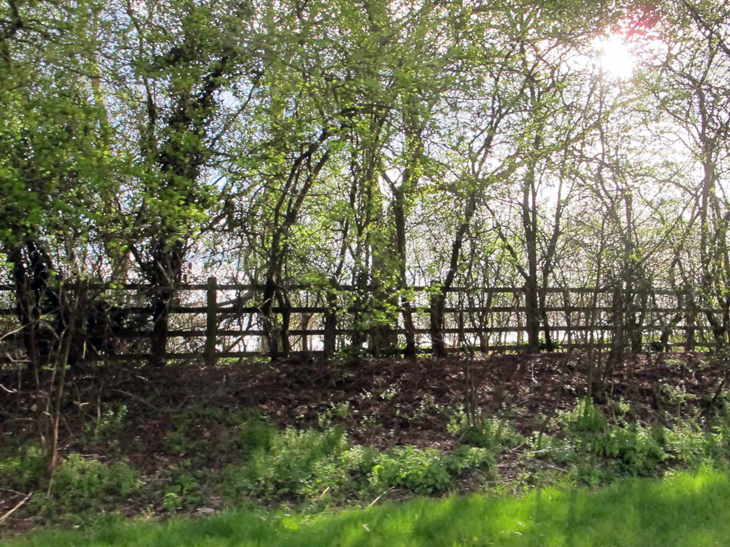 Sun dappled light through young trees that are just starting to sprout their leaves
