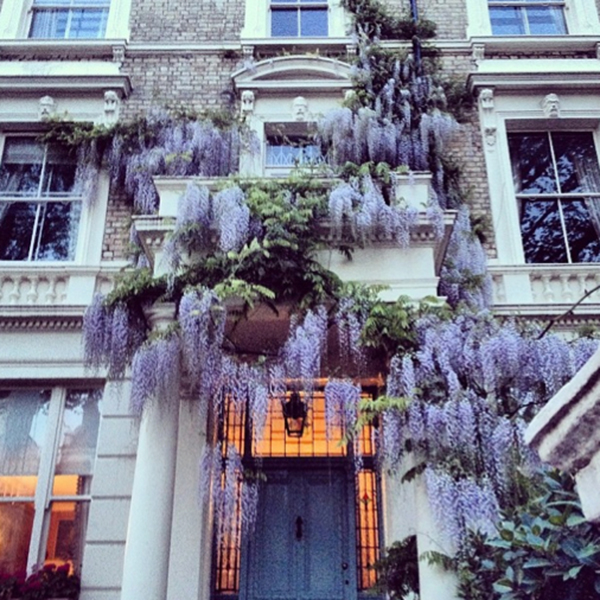 Wisteria dripping down a stately entryway
