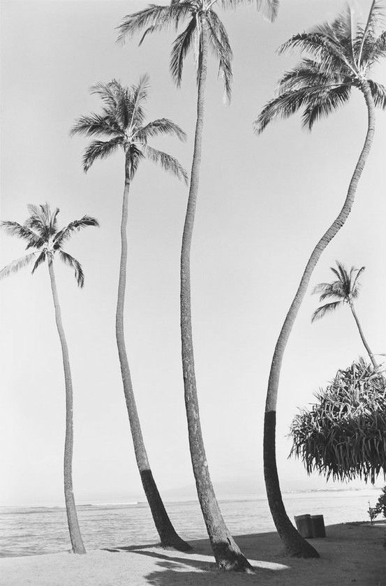Elegant palm trees via  Beautiful Nomad