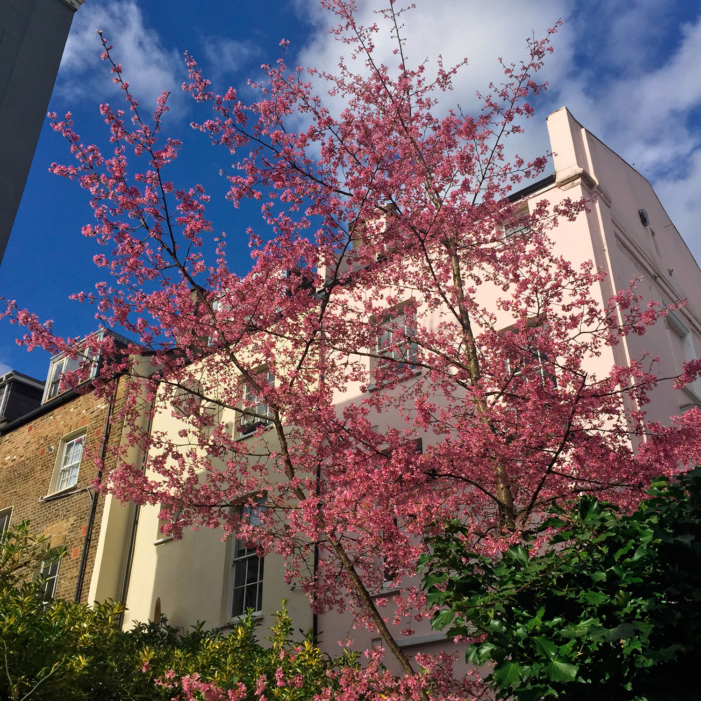 LizNehdi_PinkBlossoms_NottingHill_USE.jpg
