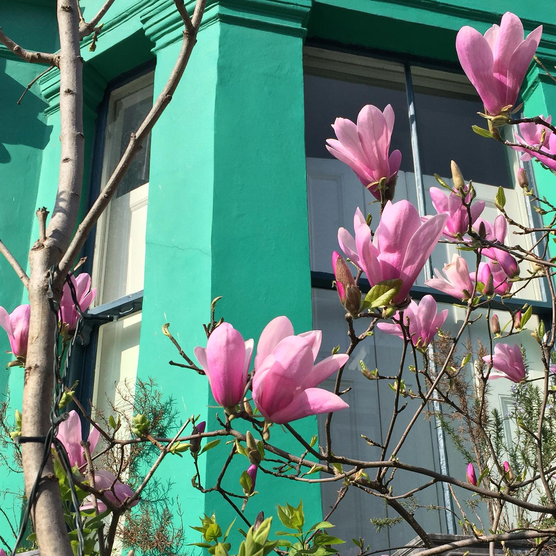 LizNehdi_NottingHill_Turquoise+MagnoliaCloseup.jpg