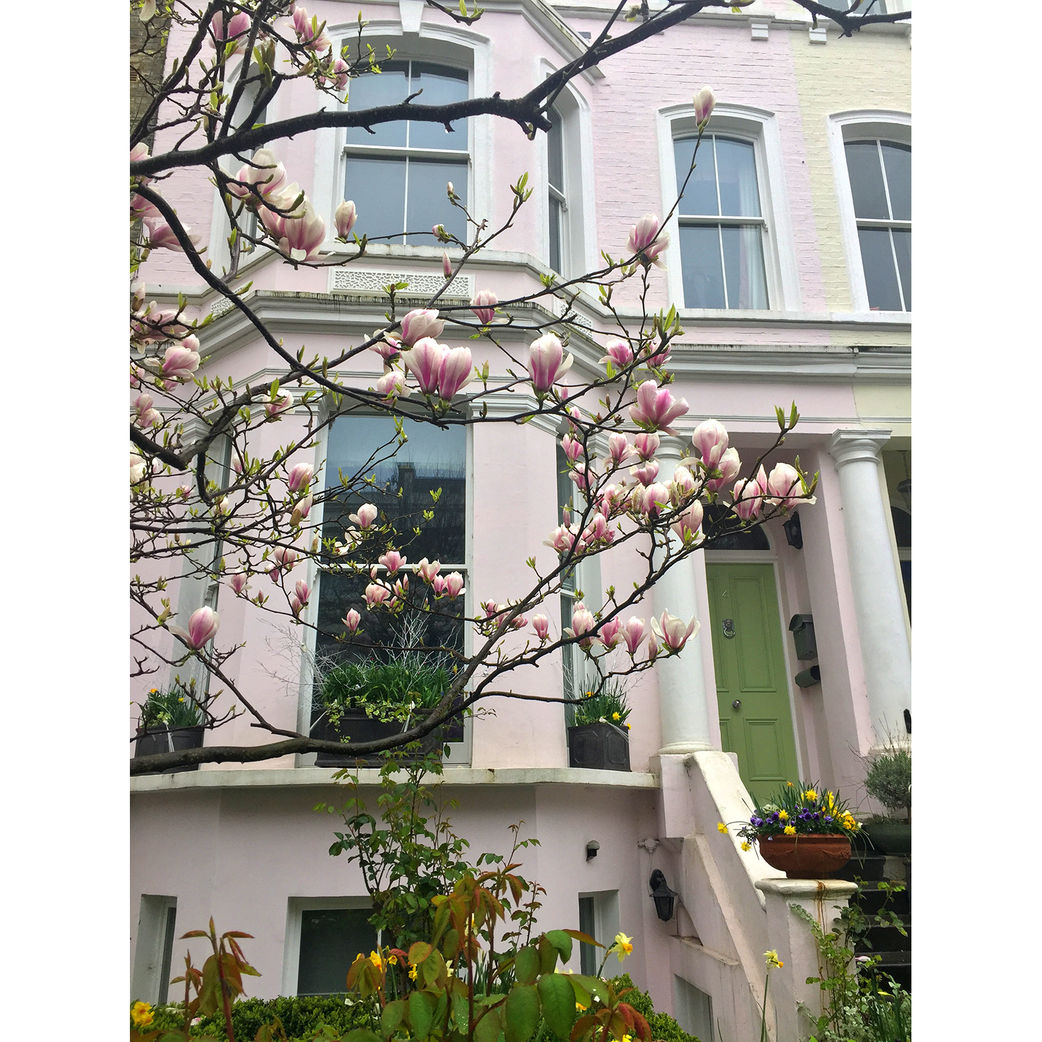 Spring transformations abound in Notting Hill 💕🌸💚🌿