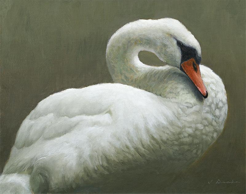 The Swan at Mayview Lake - oil