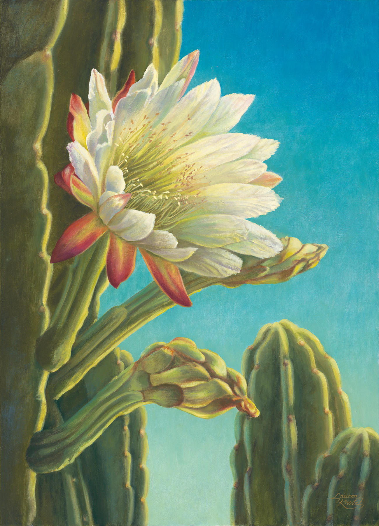 """Cereus Bloom I"""