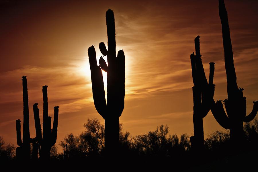 9 0947_Desert Sunset Splendor_SQByrd_6x4@150.jpg