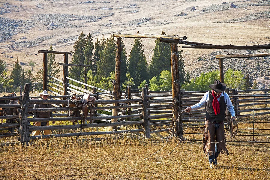 10 2423_Going To Rope Horses_©SQByrd_6x4@150.jpg