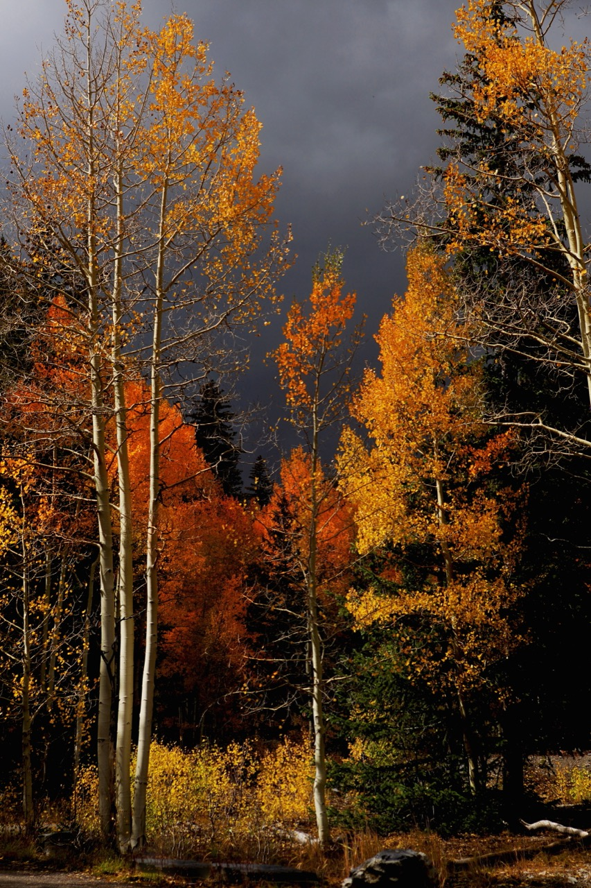 """""""The Color of Fall"""""""