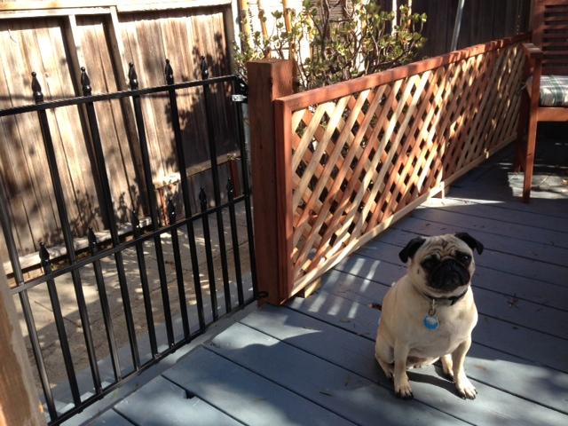 The new Gabbie gate!