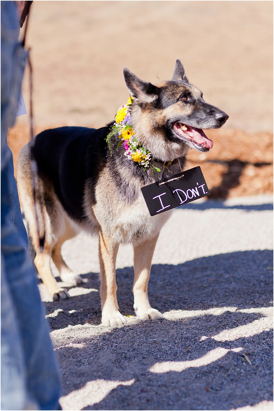 dog-friendly-wedding-venues-durango-3.jpg