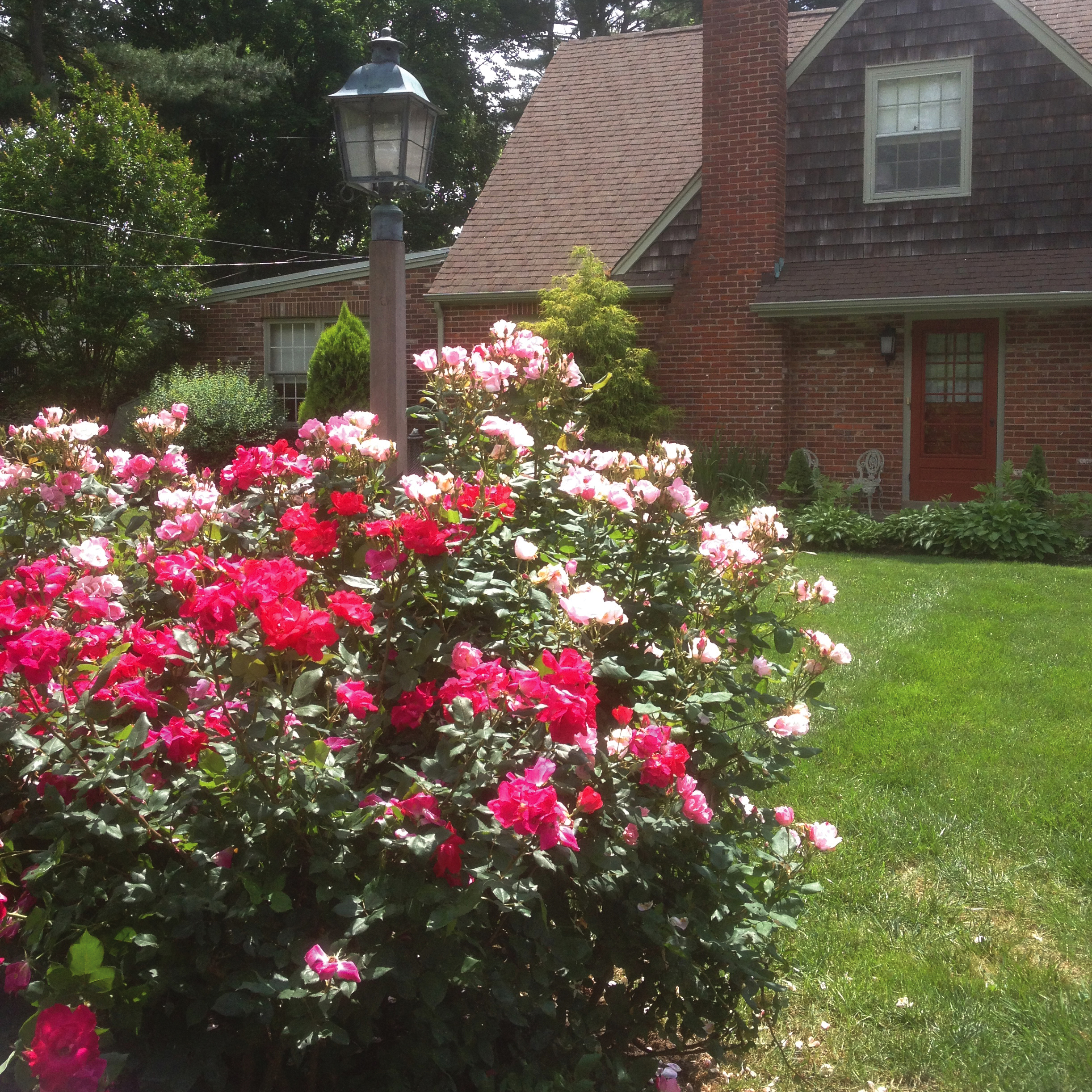 SQ2_front roses.jpg