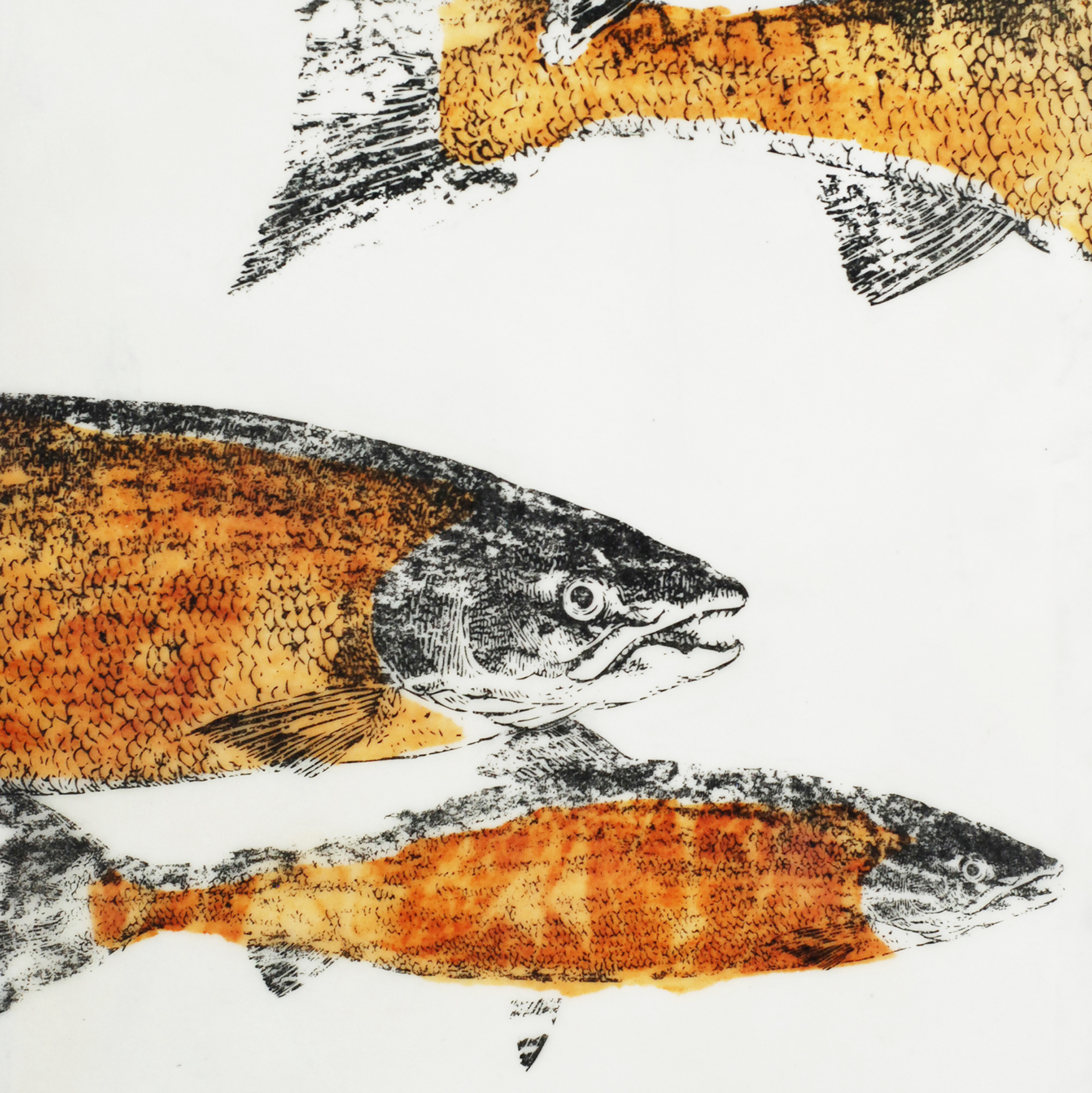 Ghost Salmon