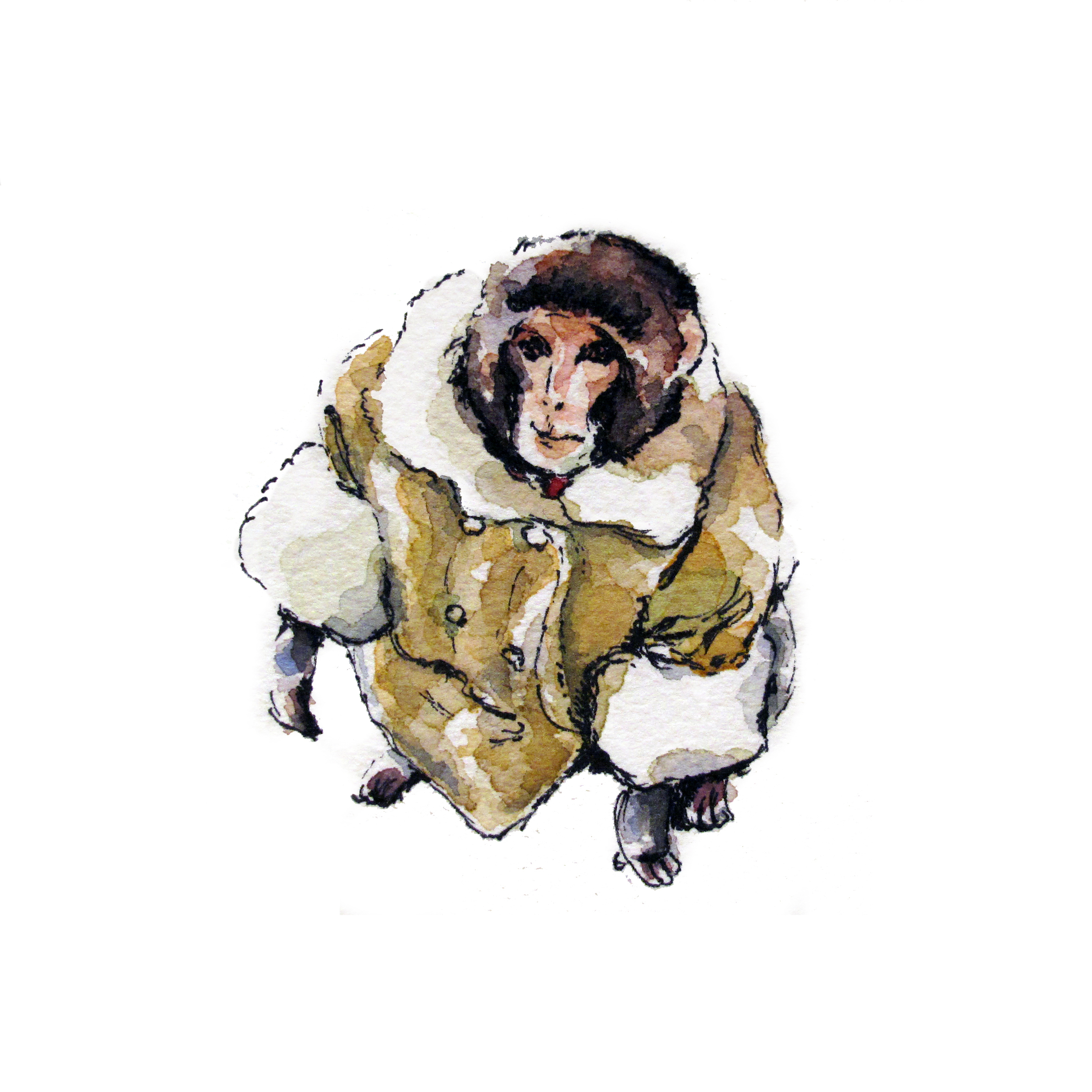 Darwin, the IKEA monkey