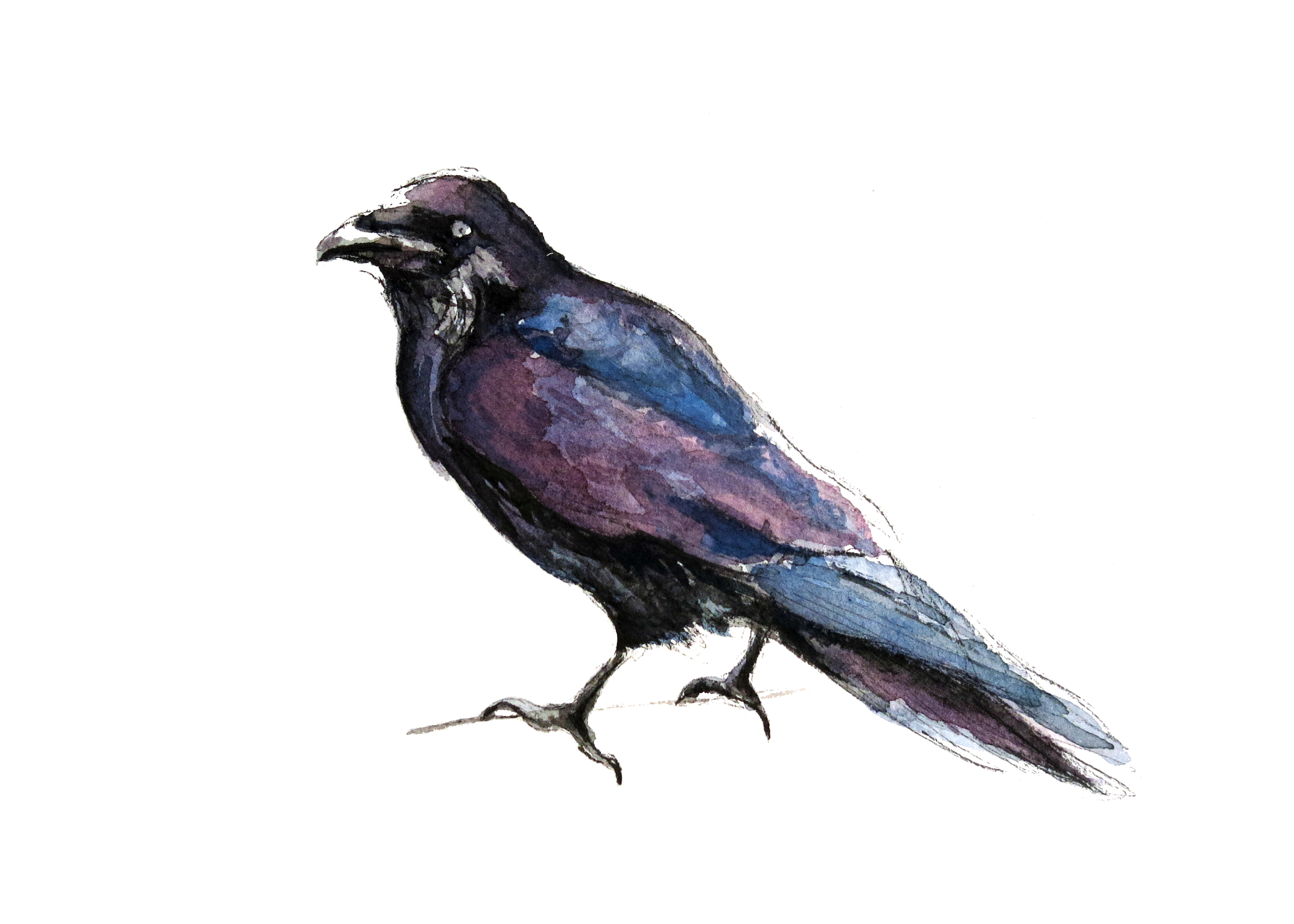 Raven(ORIGINAL SOLD)