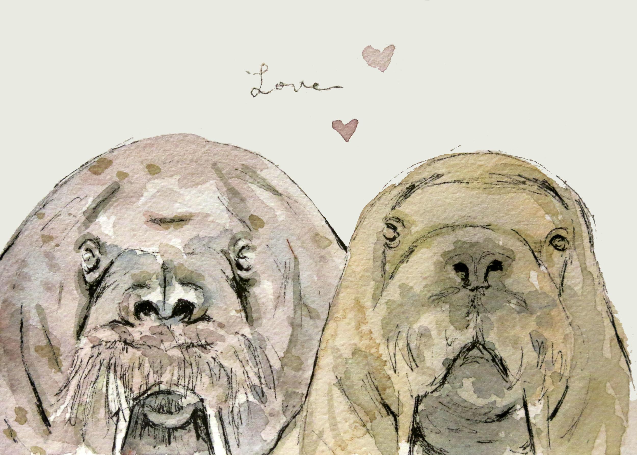 Walrus Love(ORIGINAL SOLD)