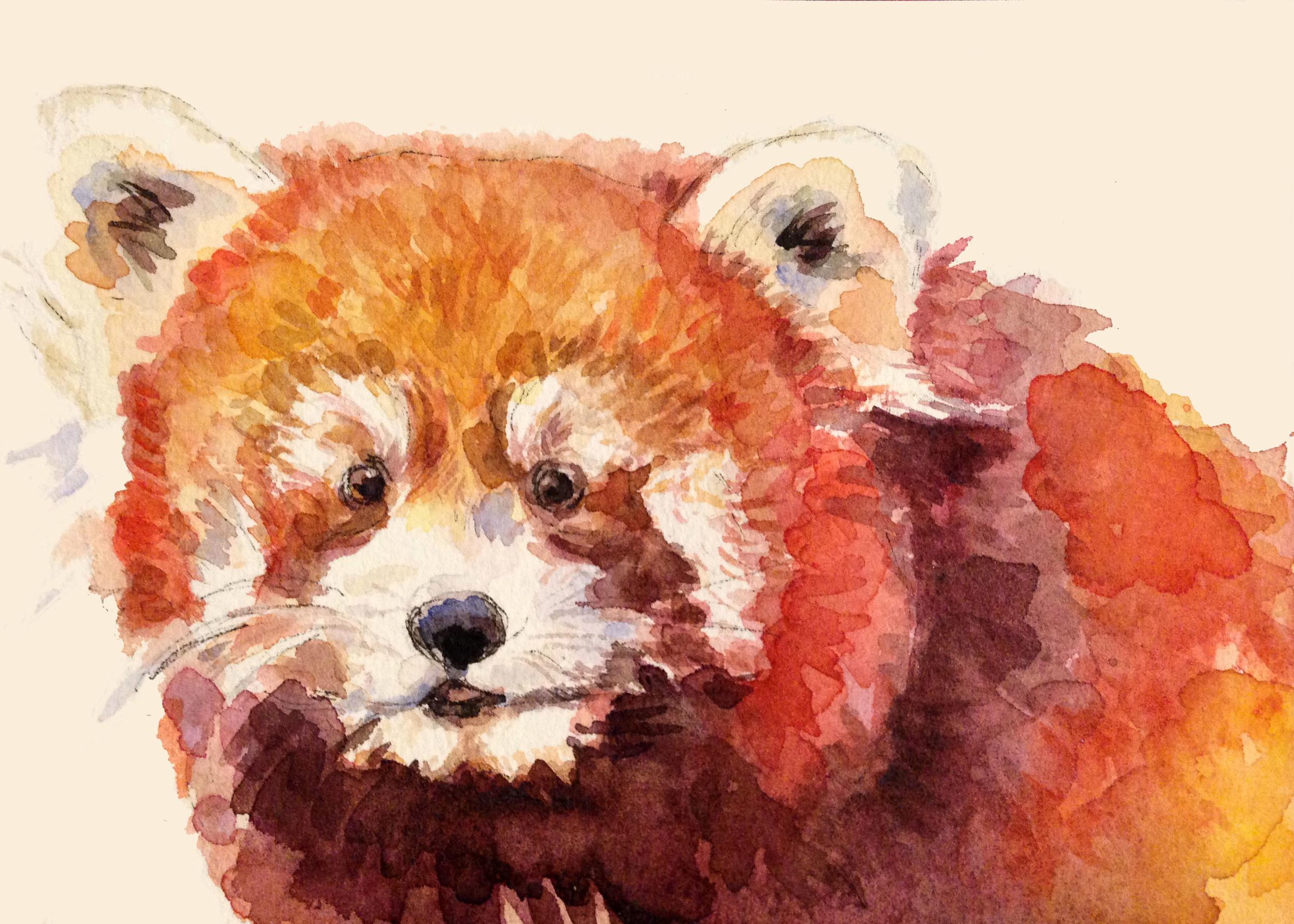 Red Panda (ORIGINAL SOLD)