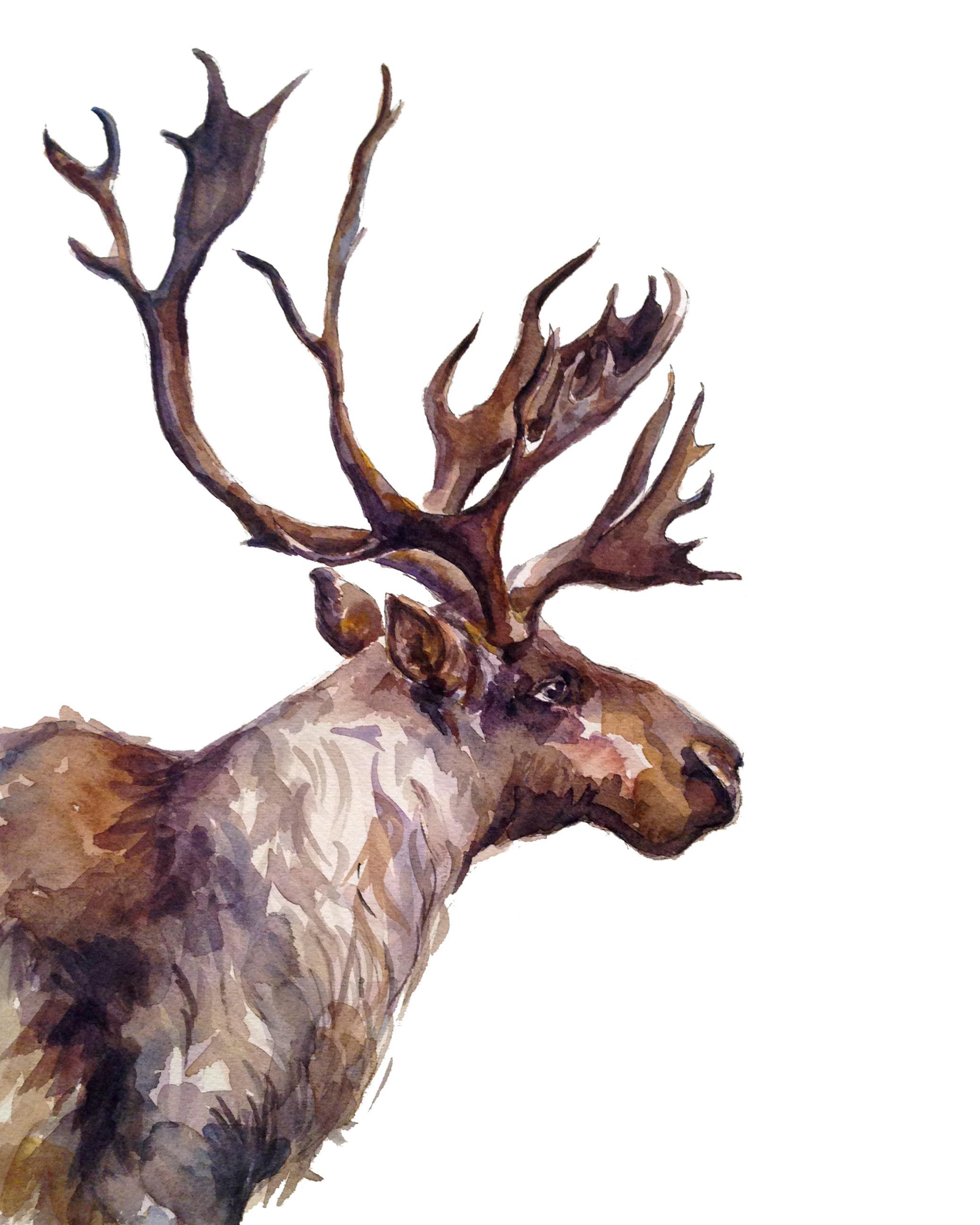 Caribou (ORIGINAL SOLD)
